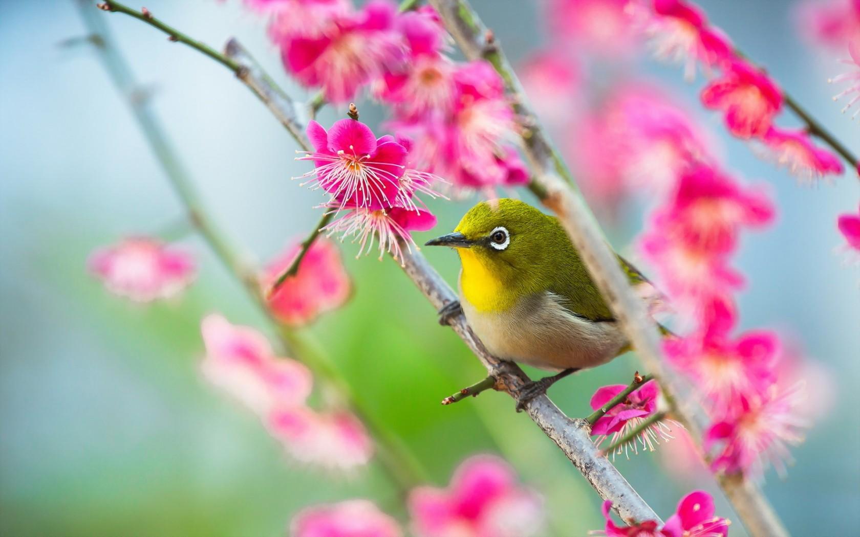 Bird Nature Close-Up Flowers HD Wallpaper