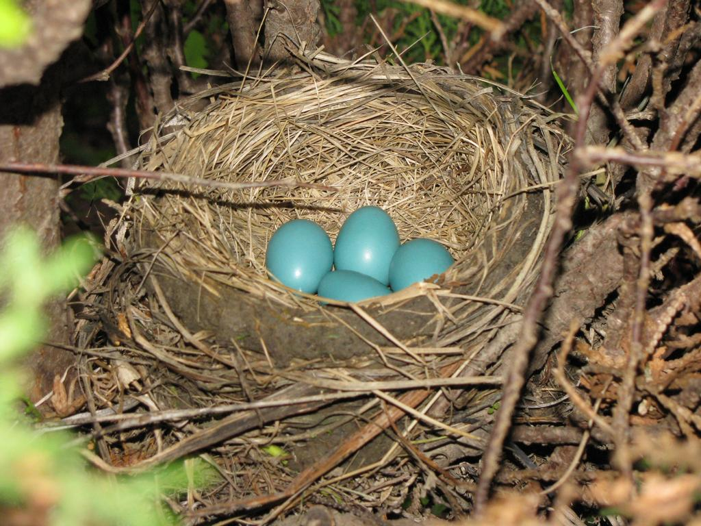 Bird Nest With