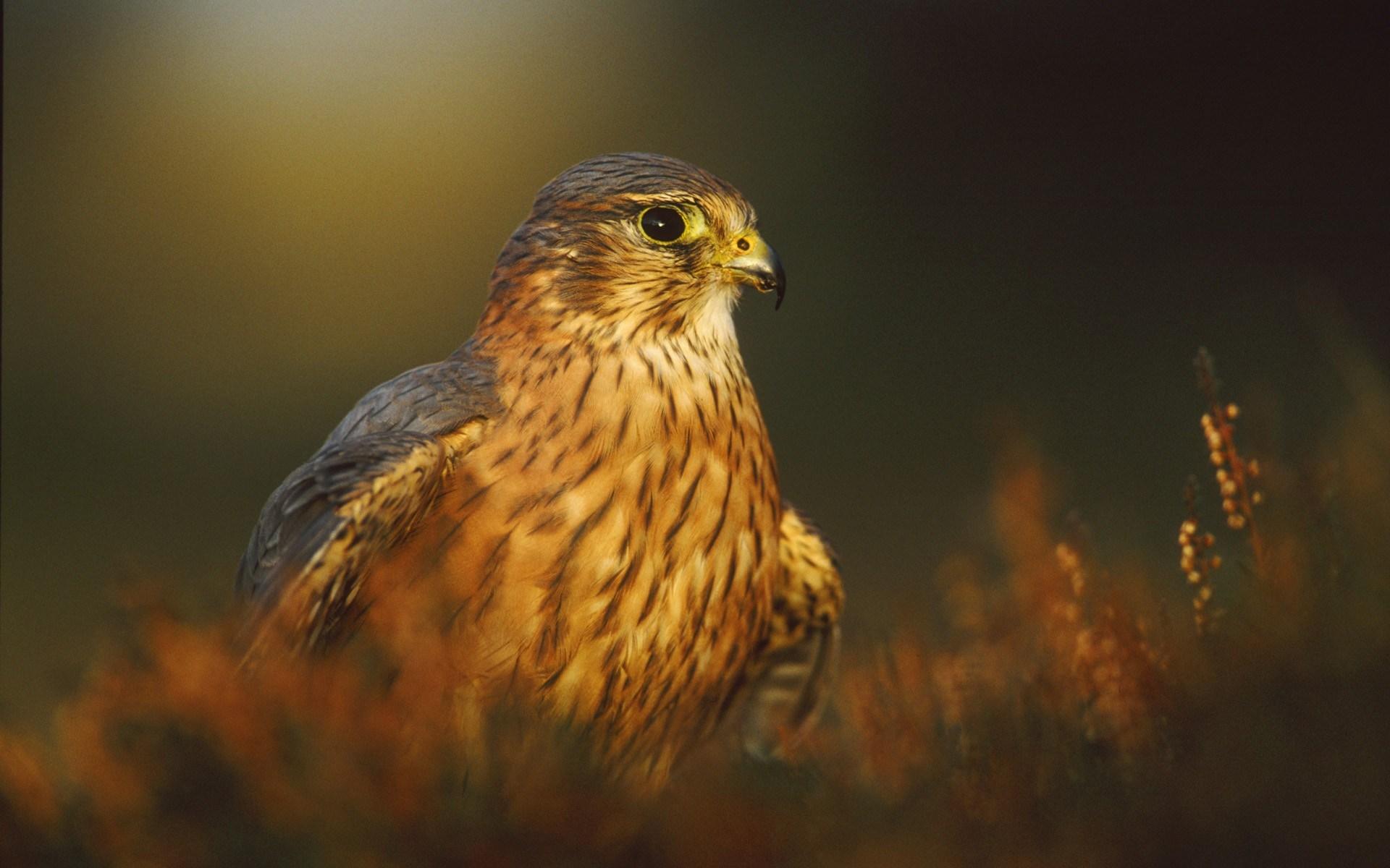 Bird of Prey Nature