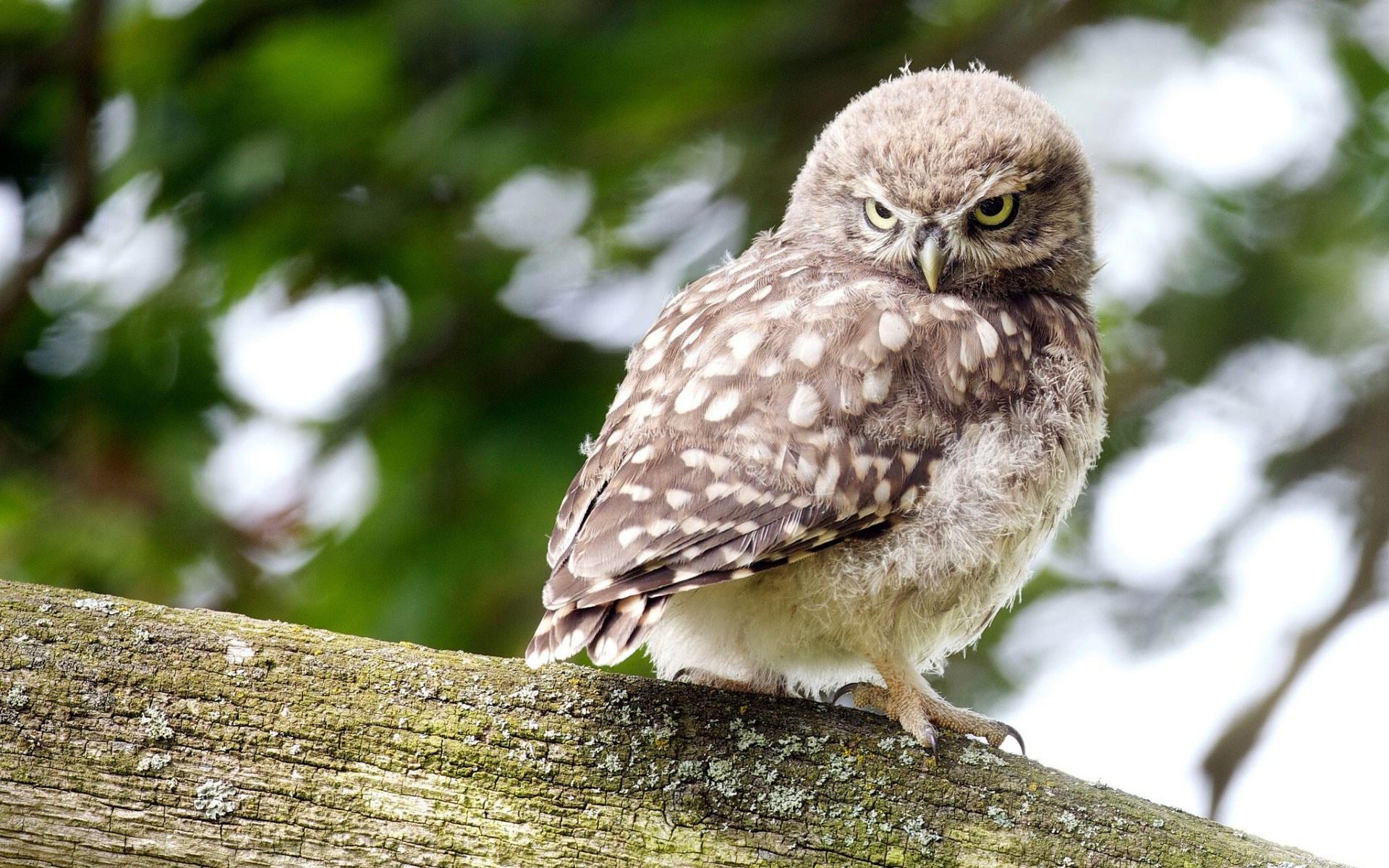 Bird Sitting Owl