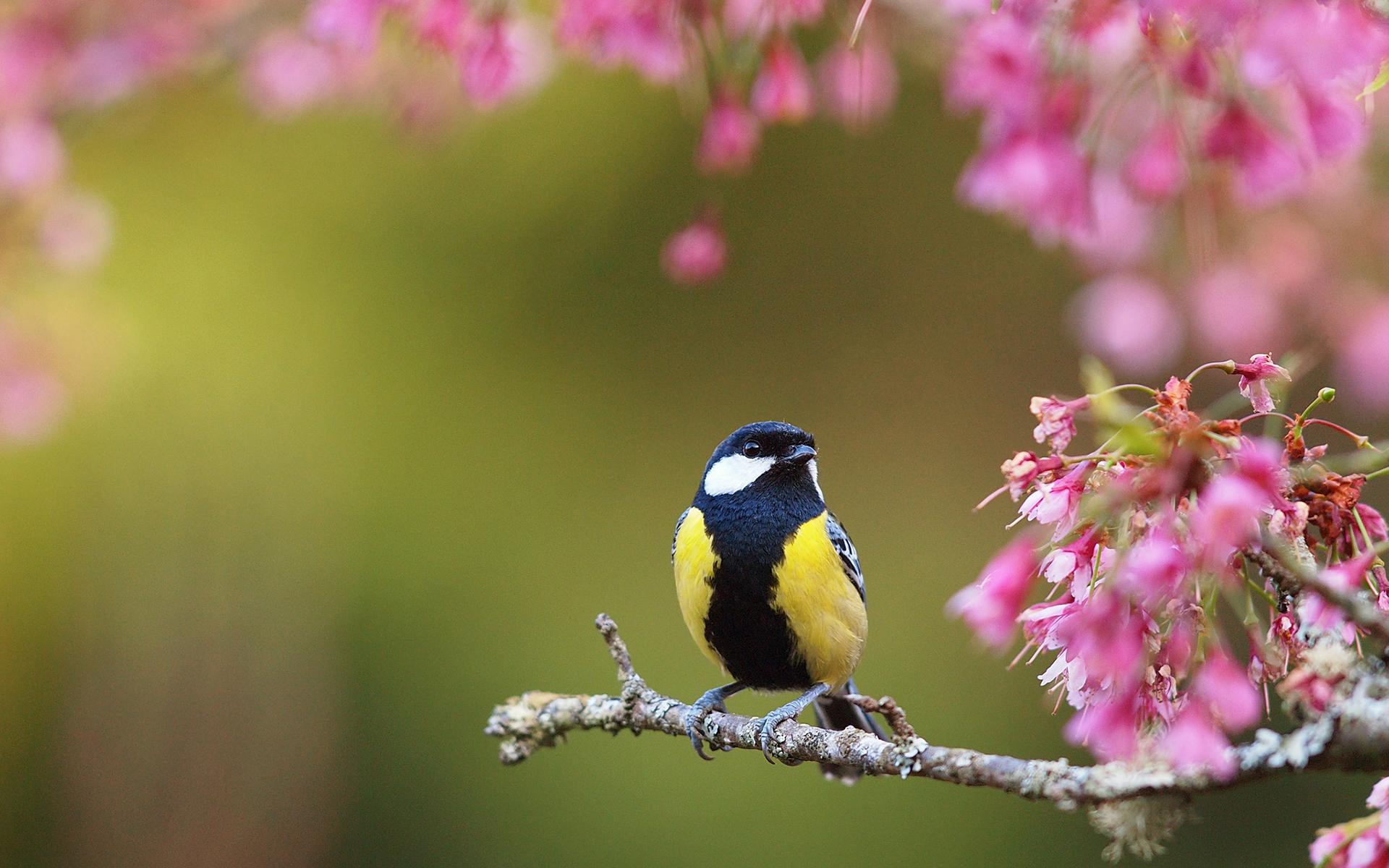Bird spring flowers
