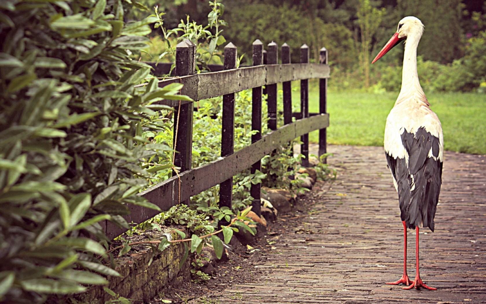 Bird Stork Fence