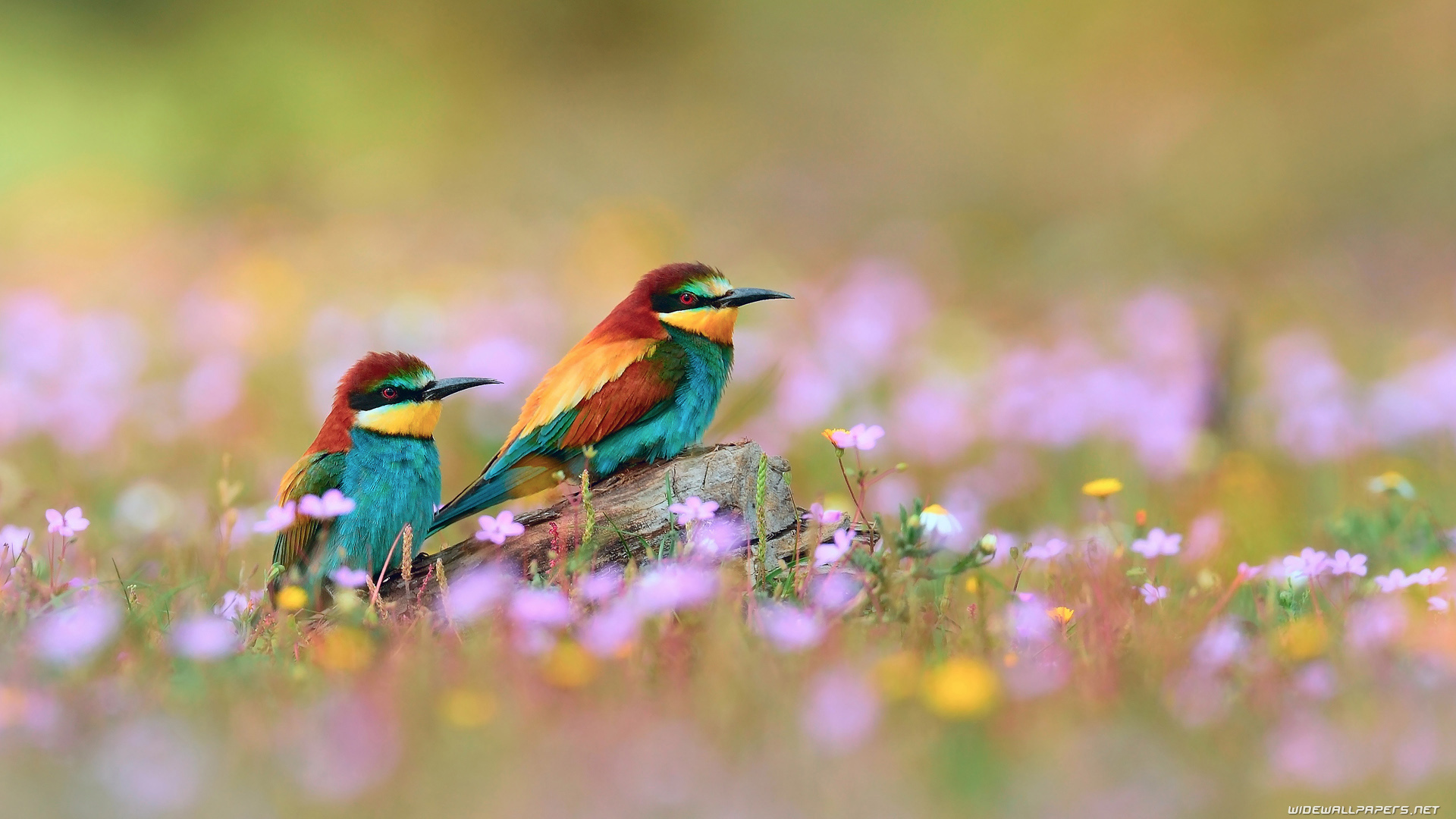 bird-wallpaper-08.jpg ...
