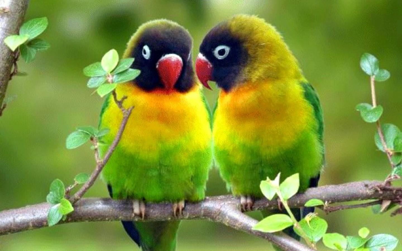 Bird Wallpaper
