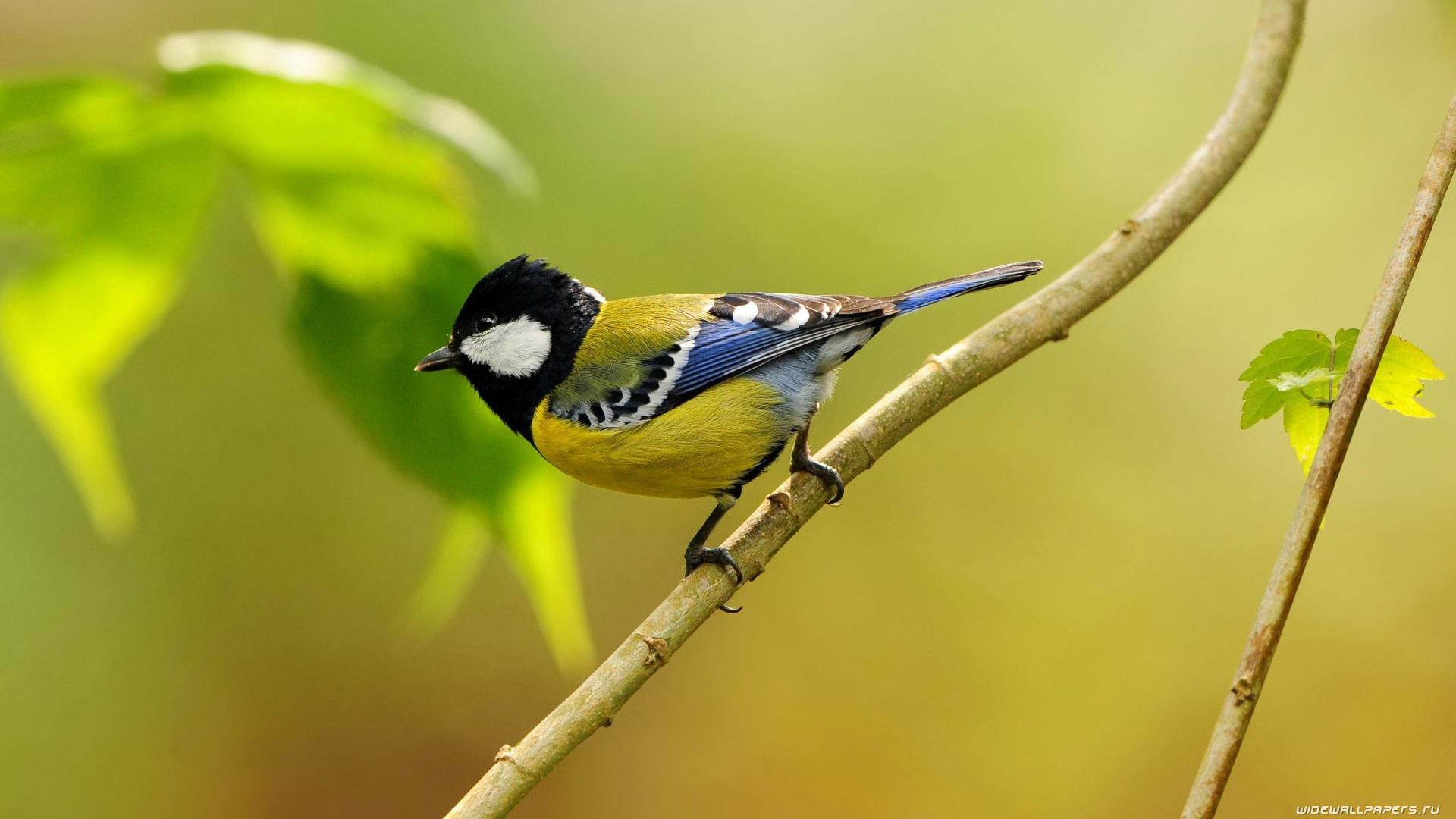 bird-wallpaper-09.jpg ...