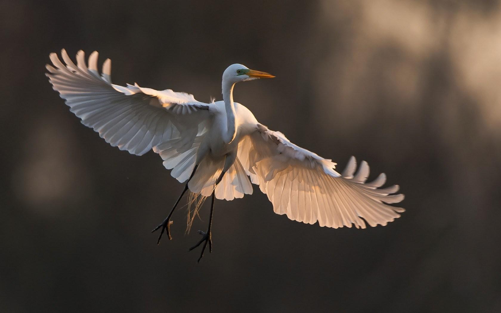 Bird Wings Nature