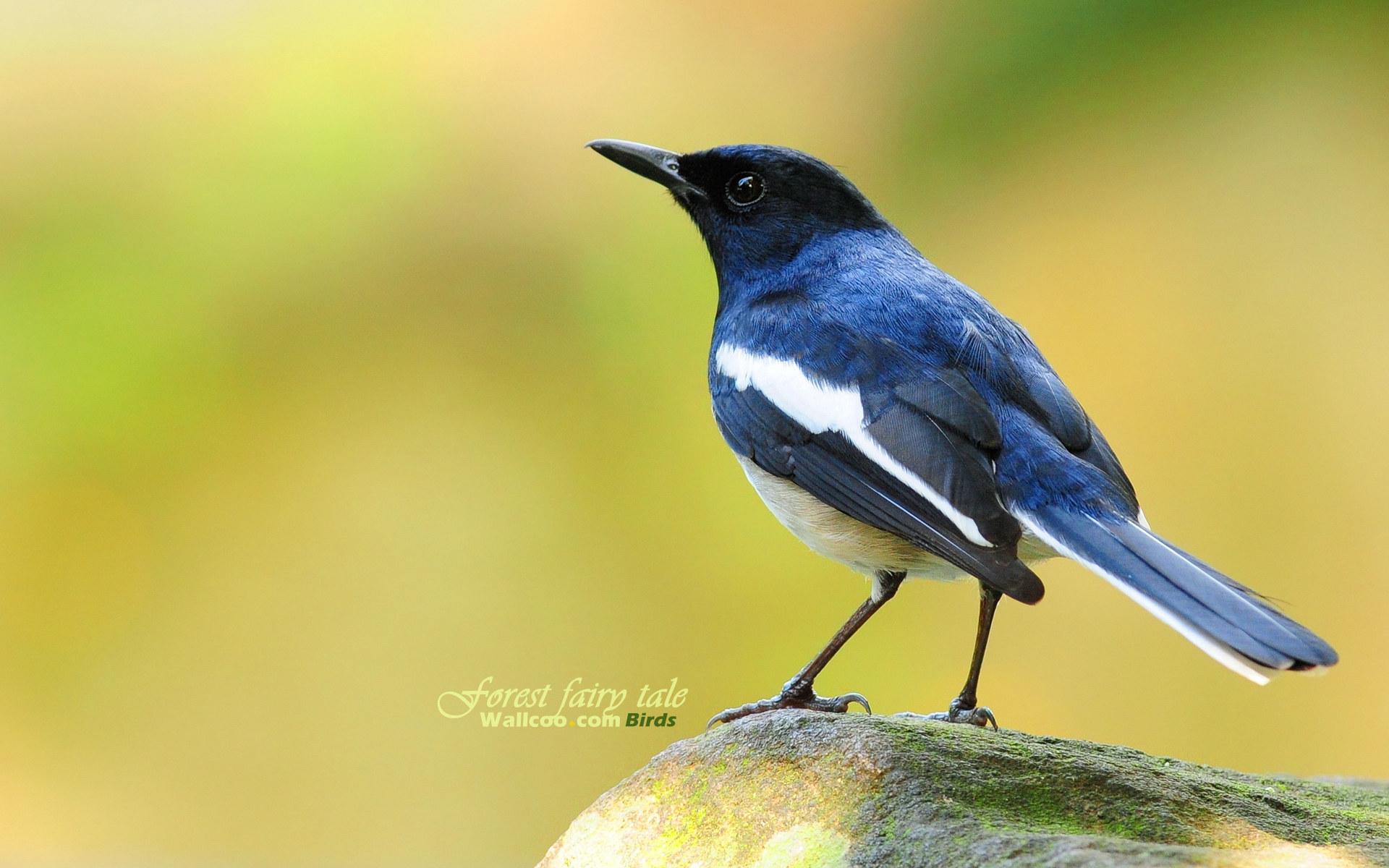 Birds - Photo #01