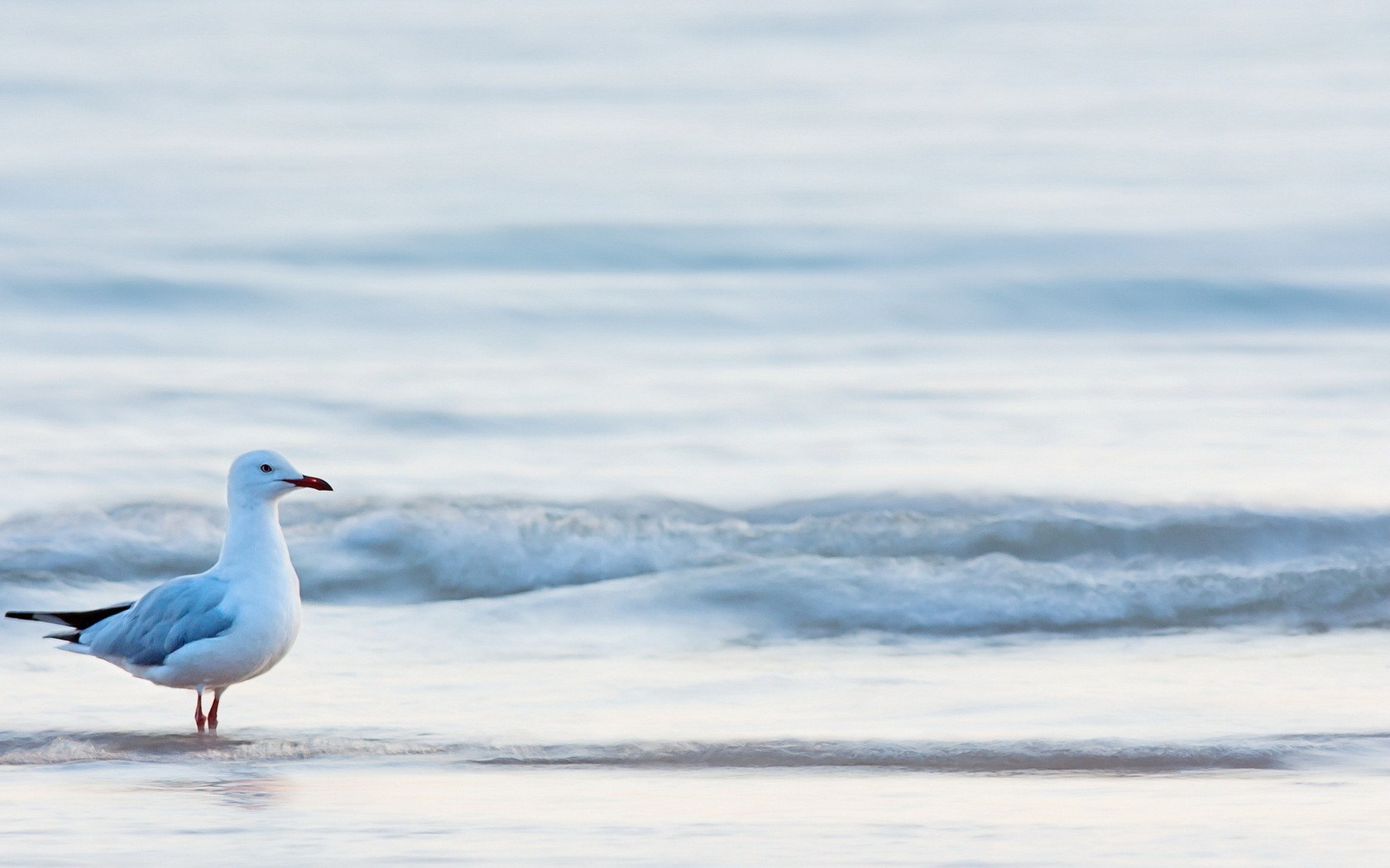 Beach Waves Sea Bird Seagull HD Wallpaper