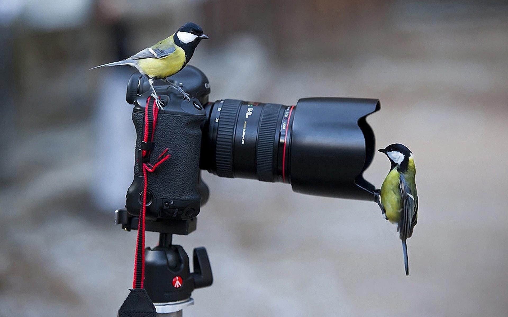 Camera Birds