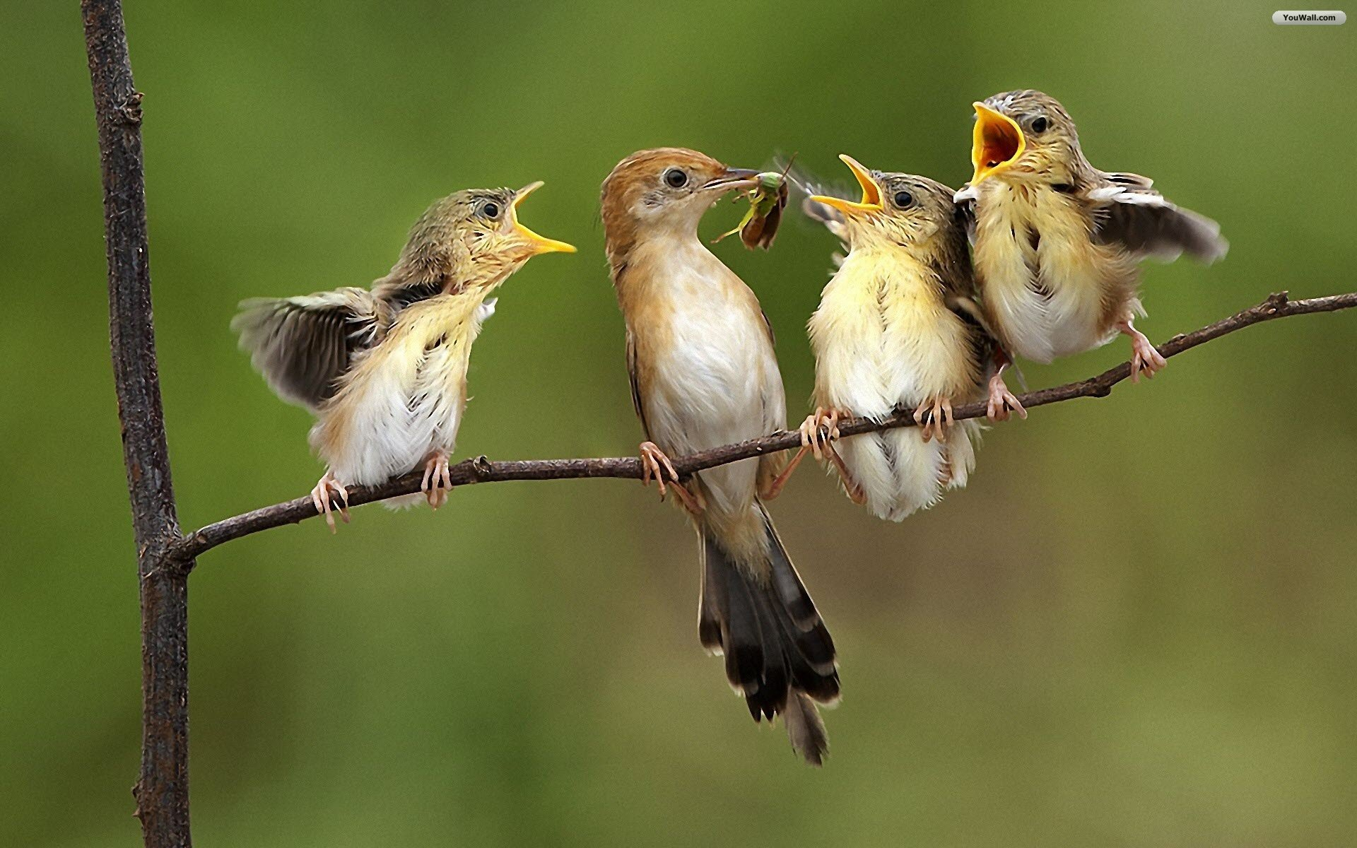 "Related Post ""bird family wallpaper"""