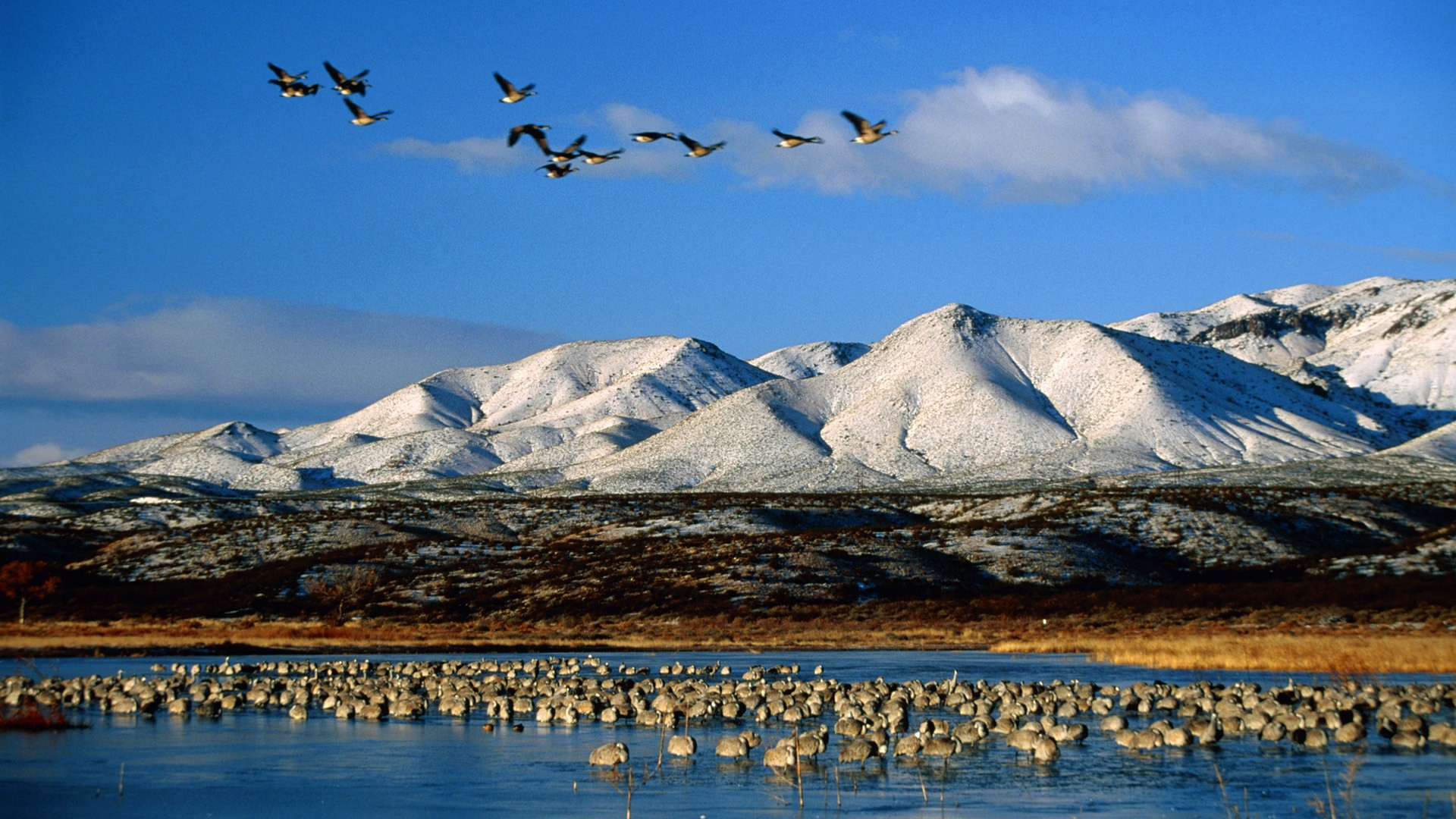Mountains Snow Birds Fields Snow Birds