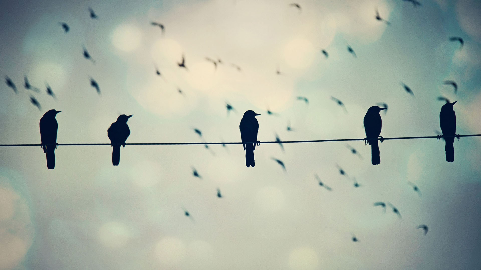 Birds On Wire Photo Wallpaper 1920x1080 11819