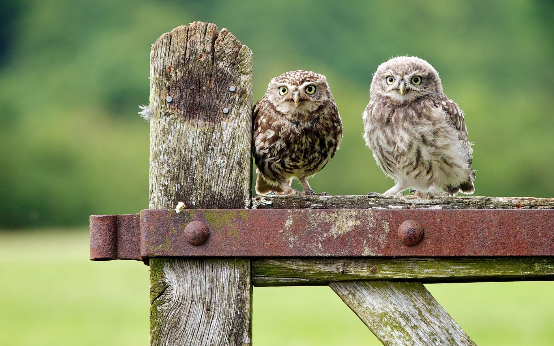 Fence Birds Owls