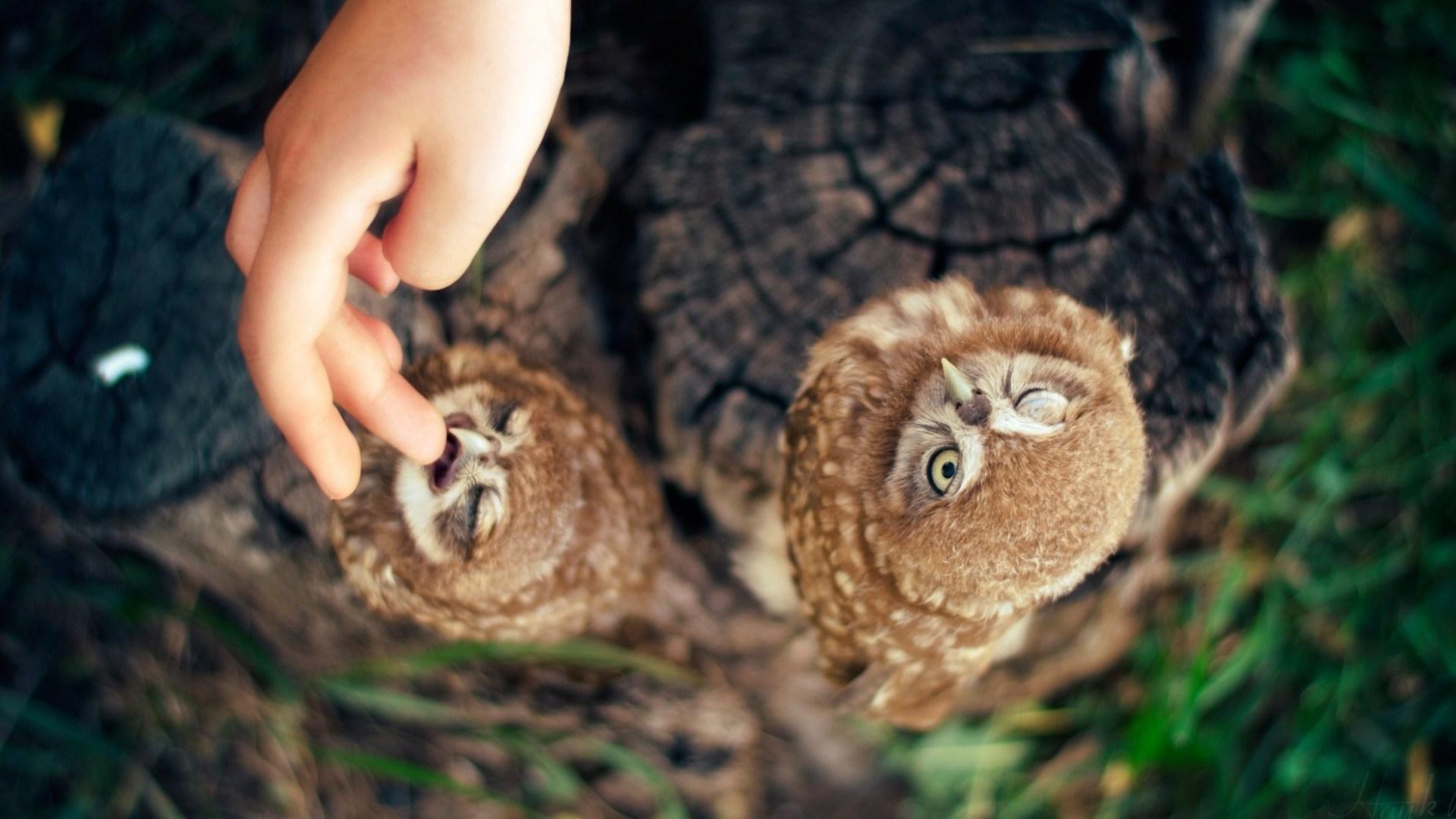 Birds Owls Hand Finger Nature HD Wallpaper