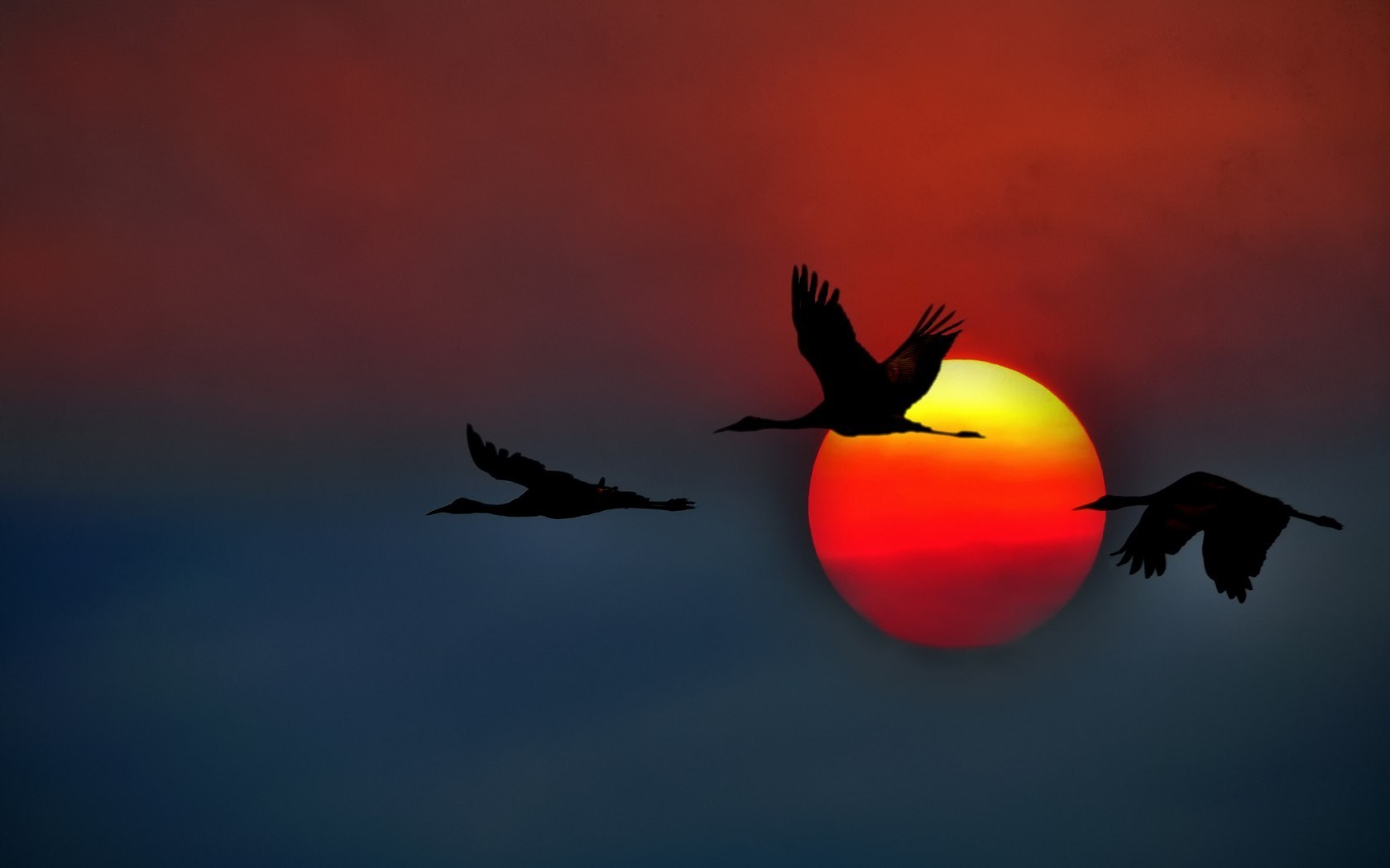 Birds Sandhill Cranes Flying California USA Sunset Sky Photo