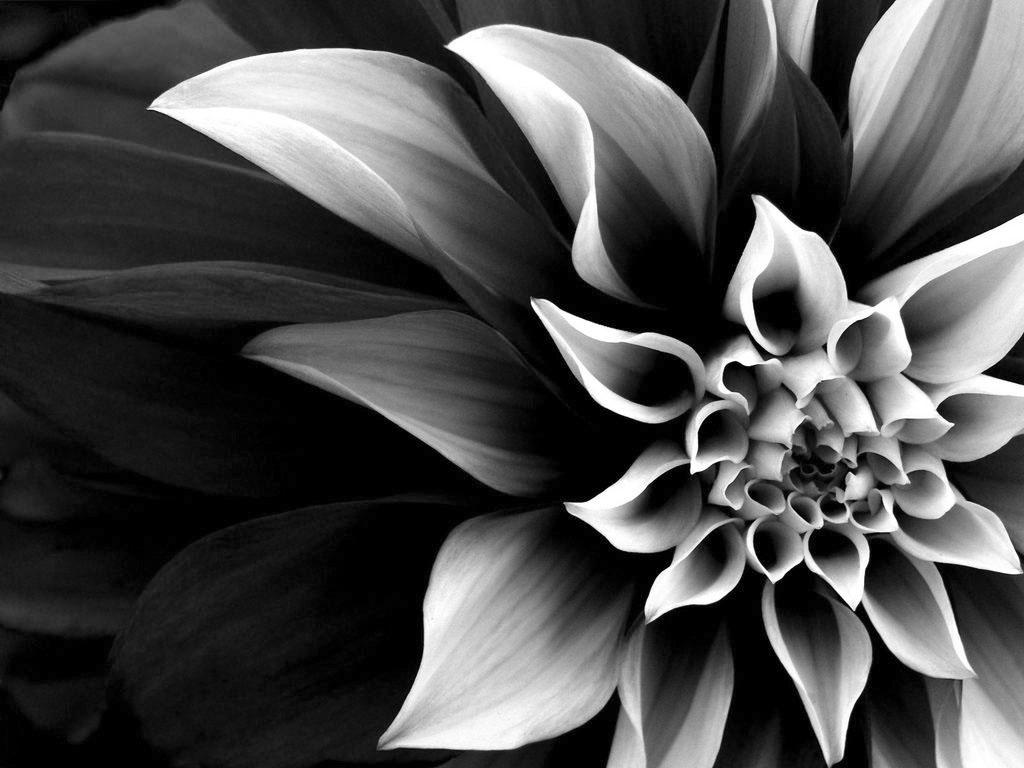 1024 x 768 · 108 kB · jpeg, Most Beautiful Flower