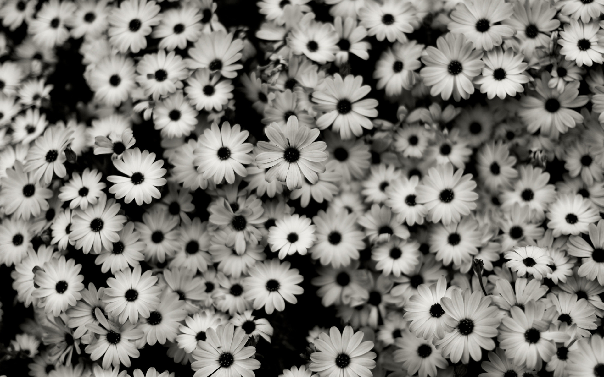 Black & White Background 2
