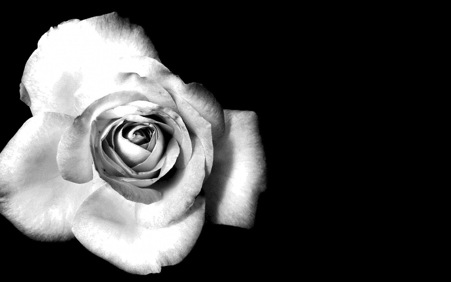 Previous Image Go Back To Black And White Flower Wallpaper HD For
