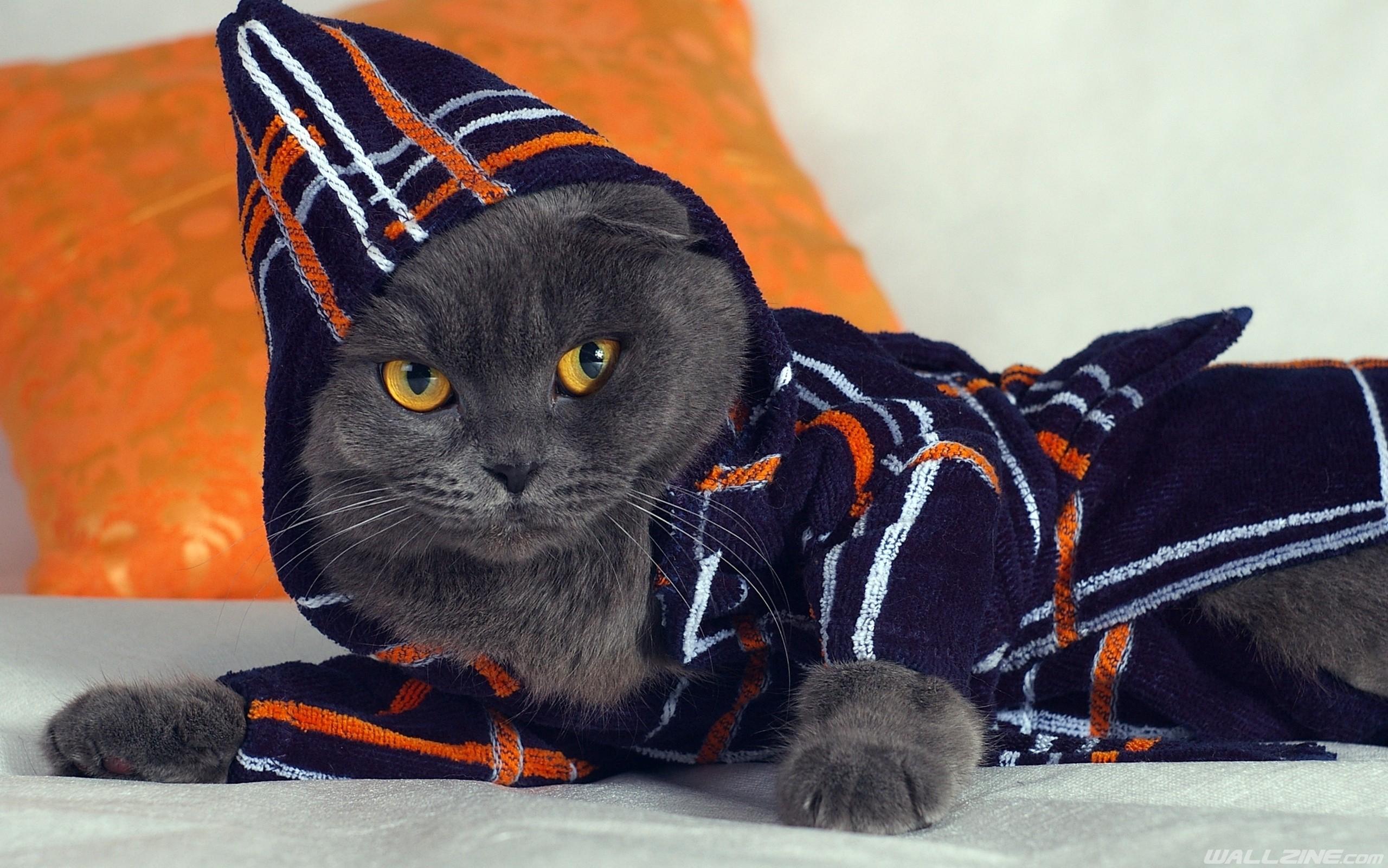 Black Cat Bathrobe