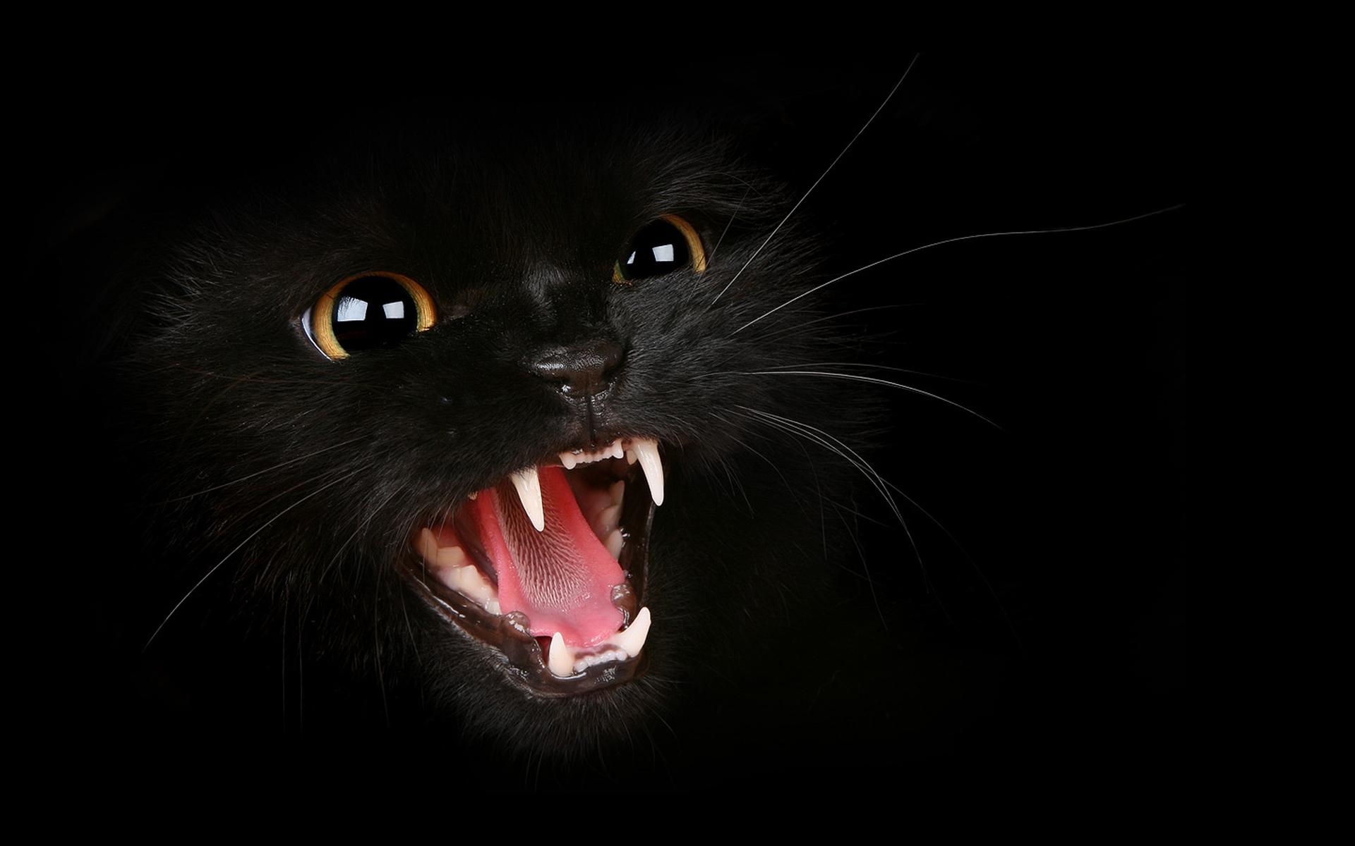 Black Cat HD Wallpapers (12)