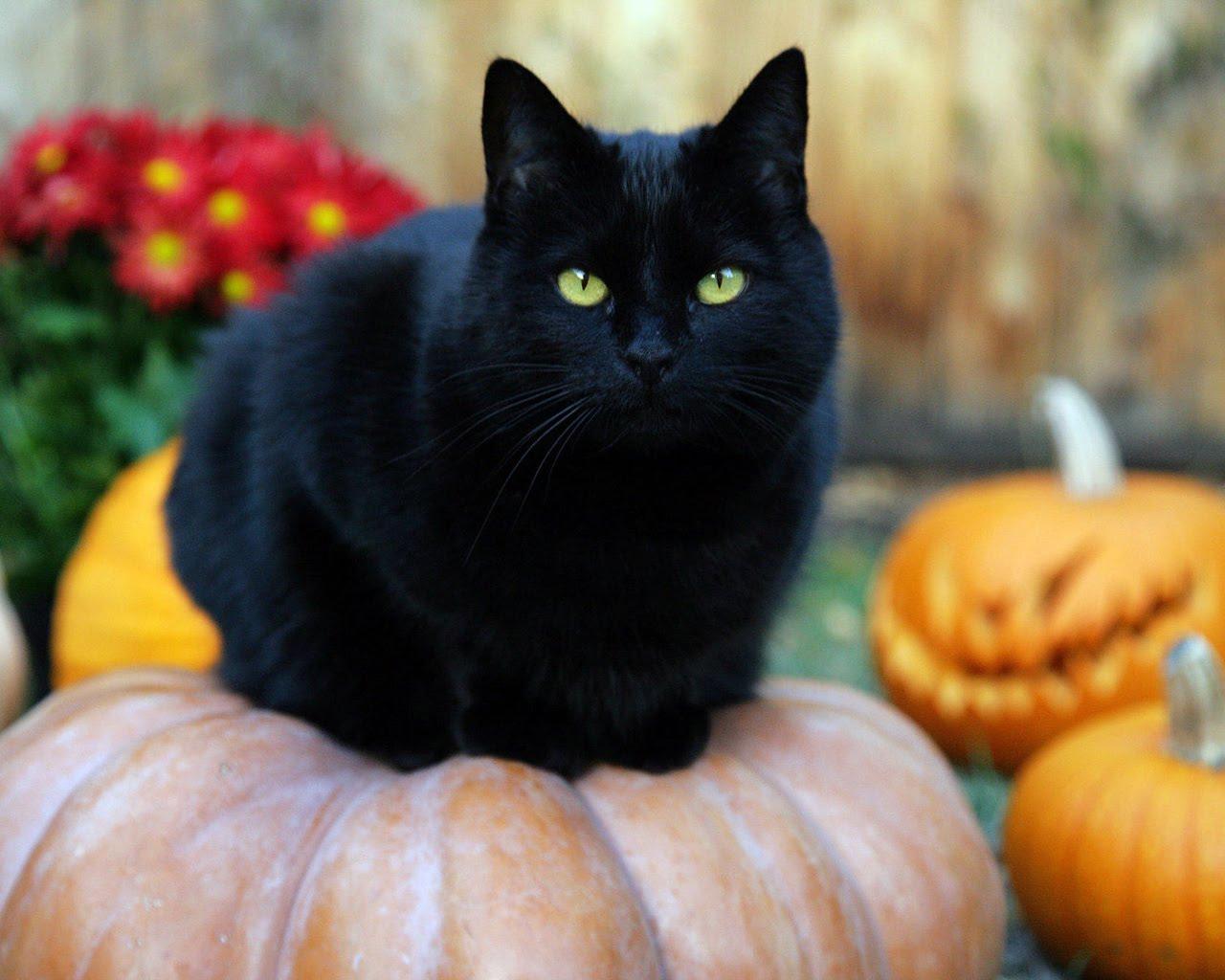 Black Cat HD Wallpapers (5)