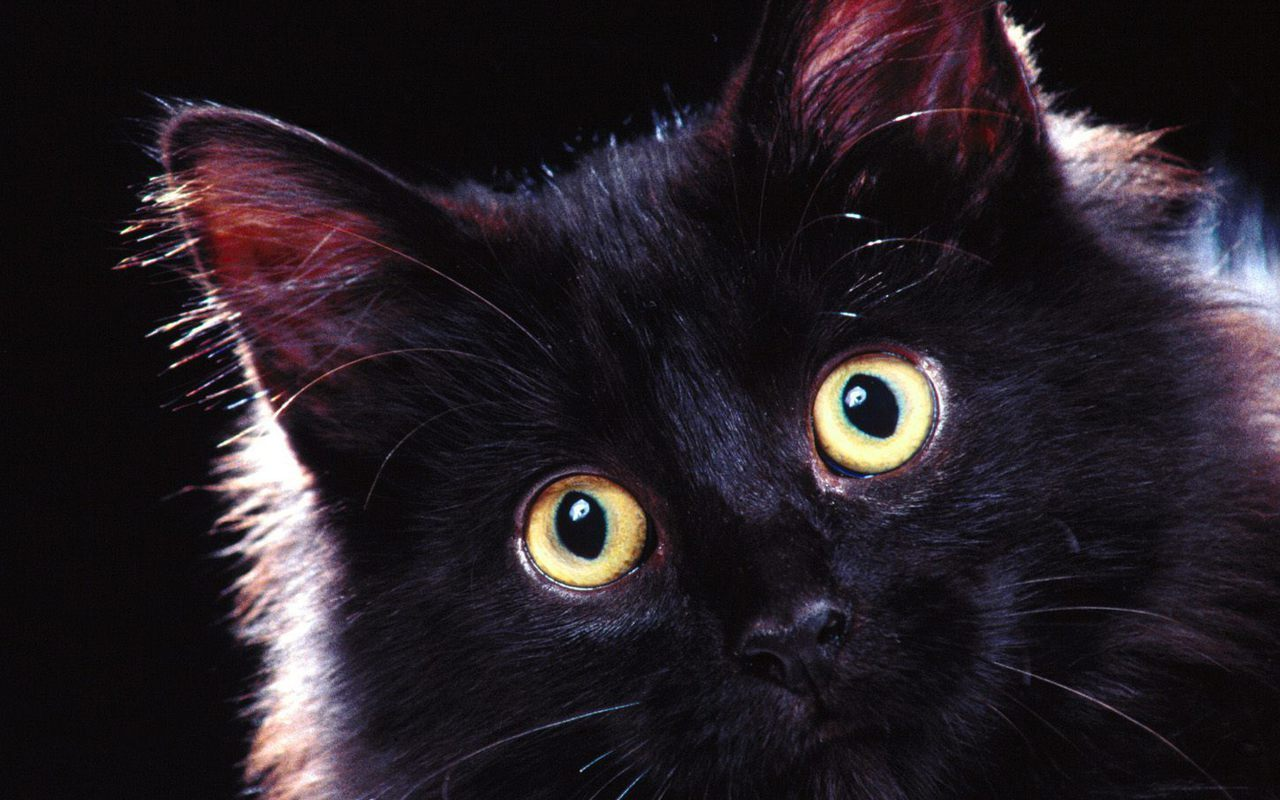 devil-black-cats-wallpapers