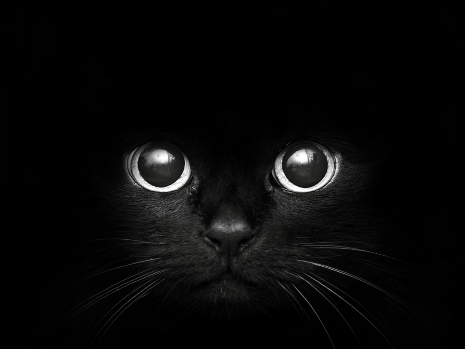 black cat hd wallpaper