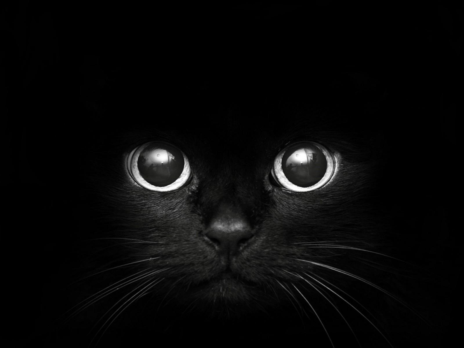 black cat wallpaper | 1600x1200 | #74496