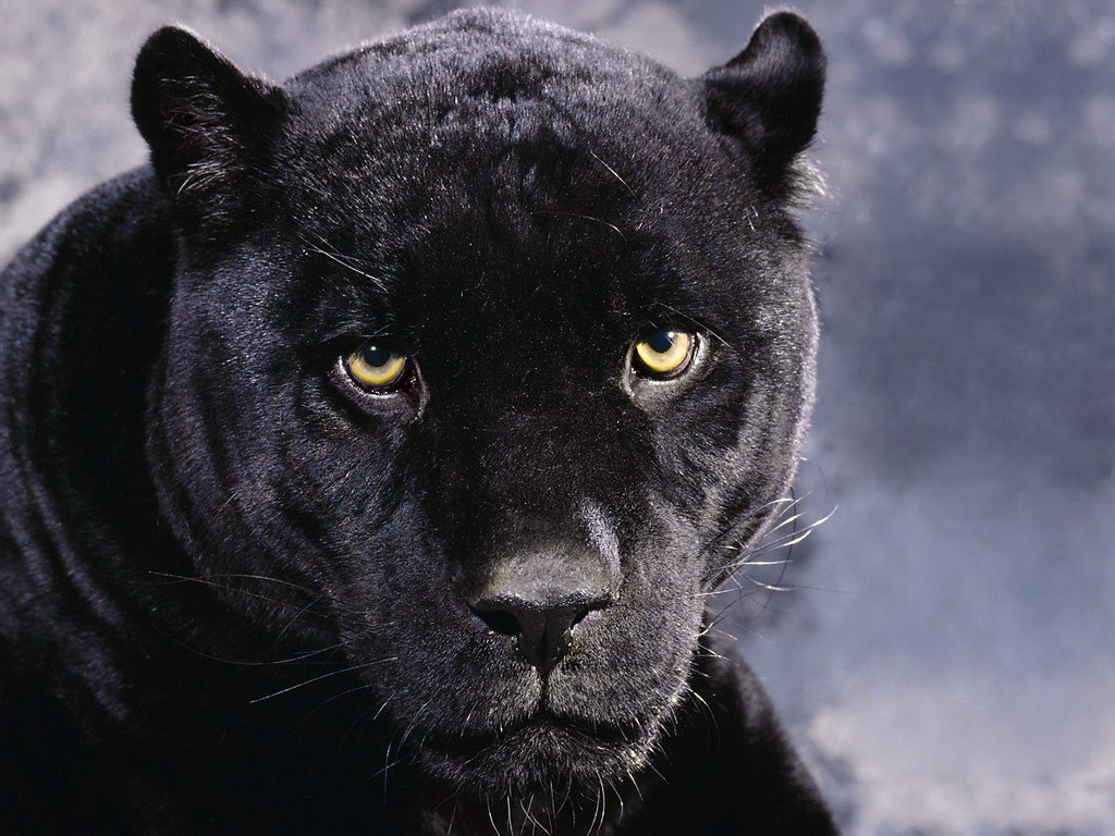 Dark Mood Black Panther