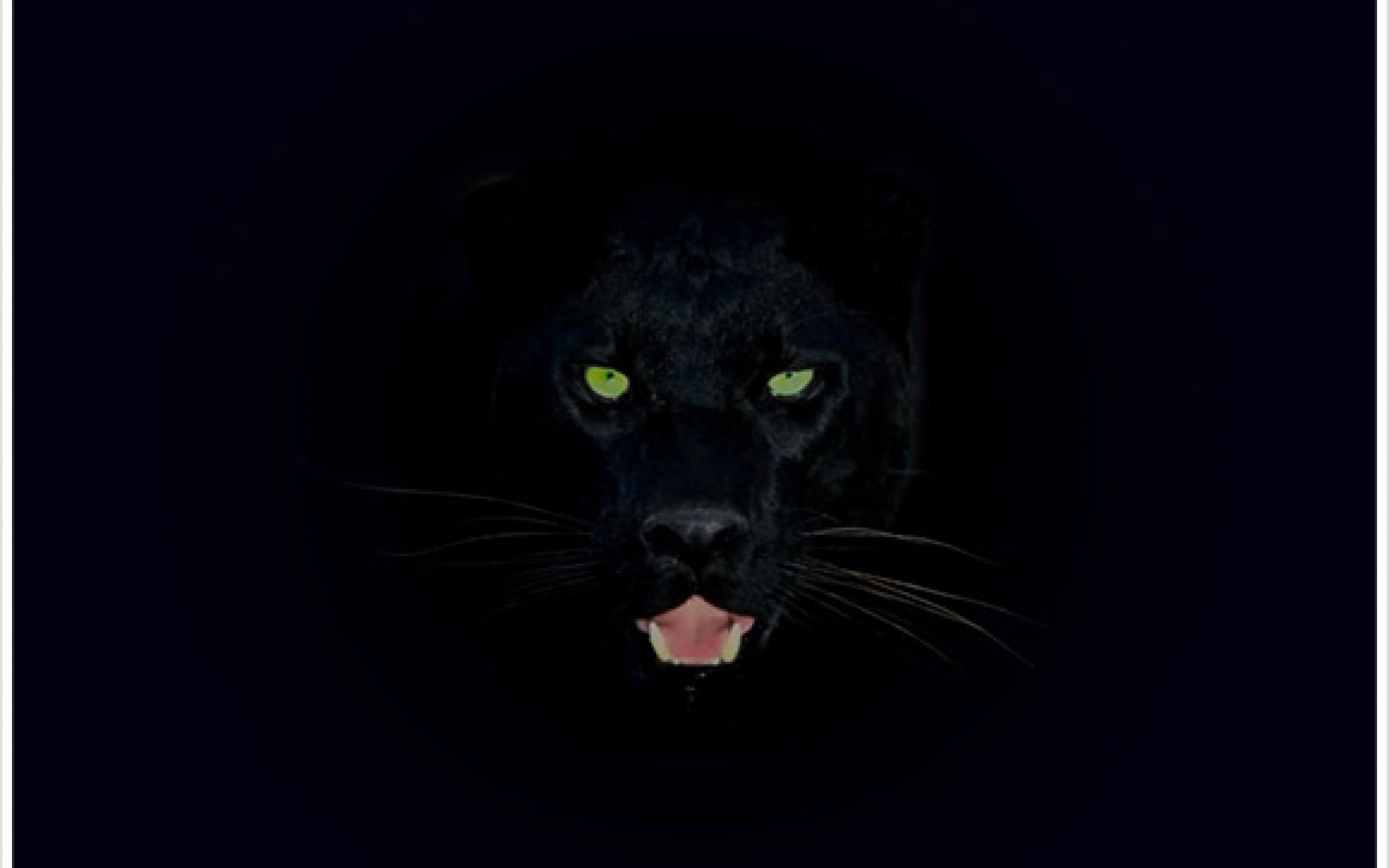 Black Panther Wallpaper 2560x1600 45763