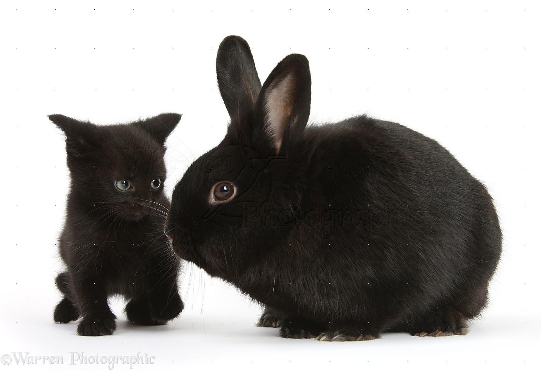 Black rabbit #4