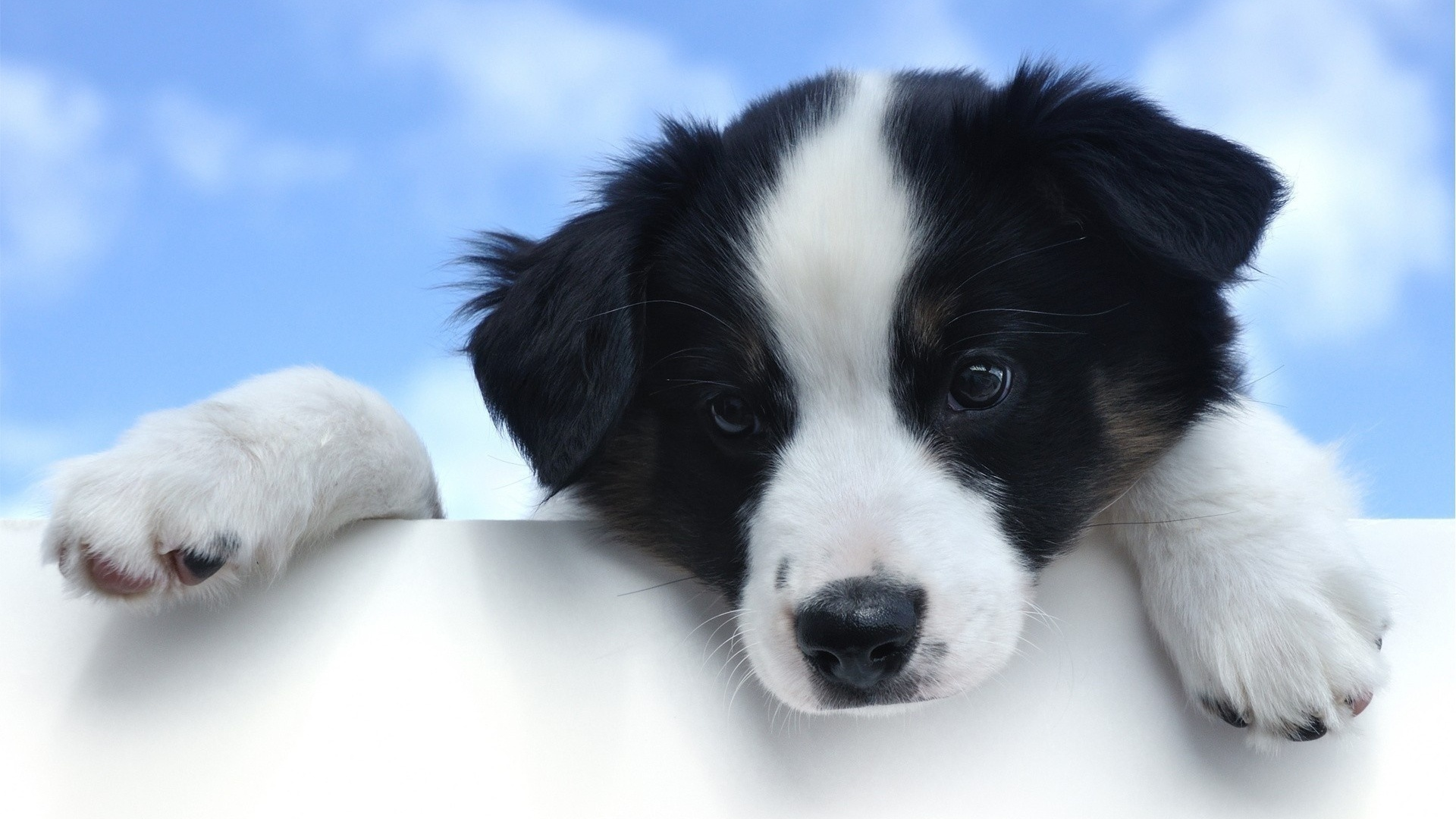 Description: The Wallpaper. Description: The Wallpaper above is Black white dog ...