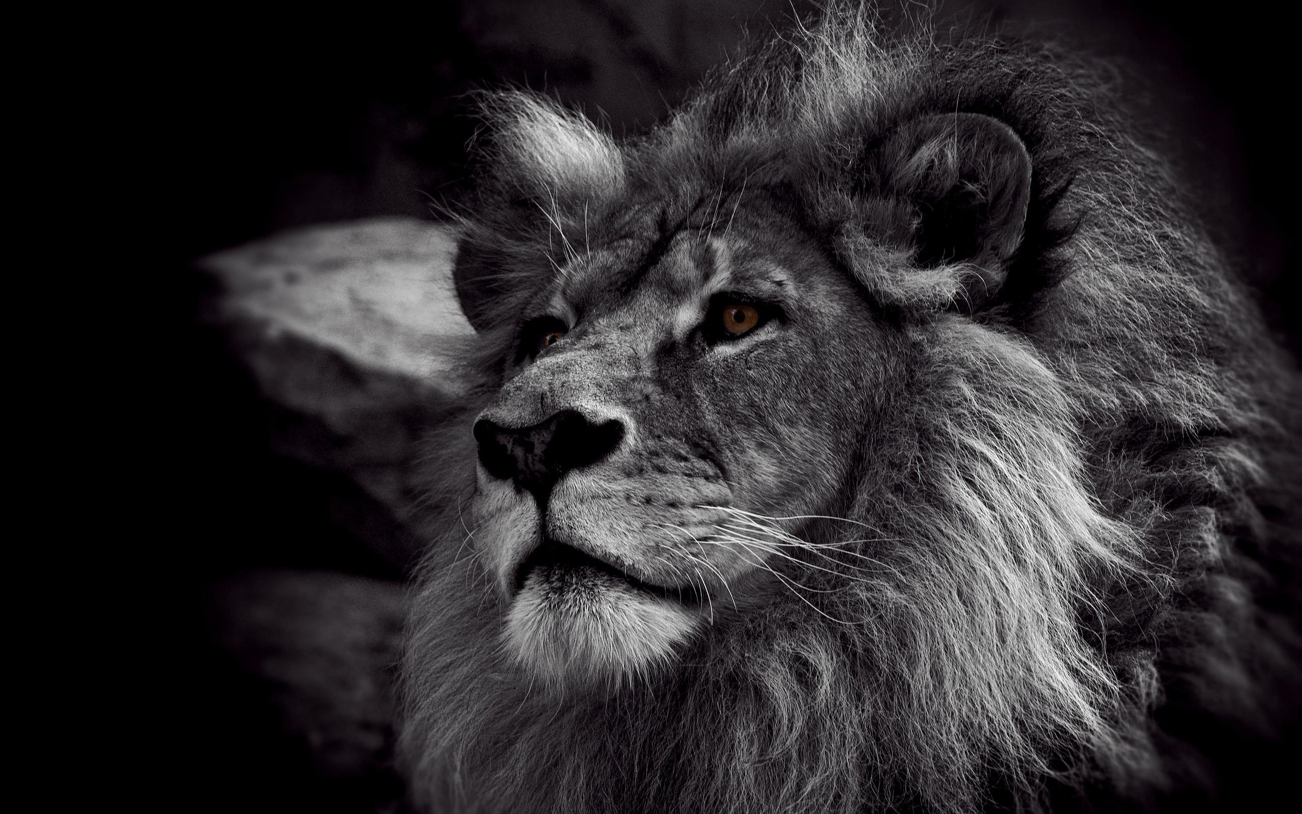Black White Lion
