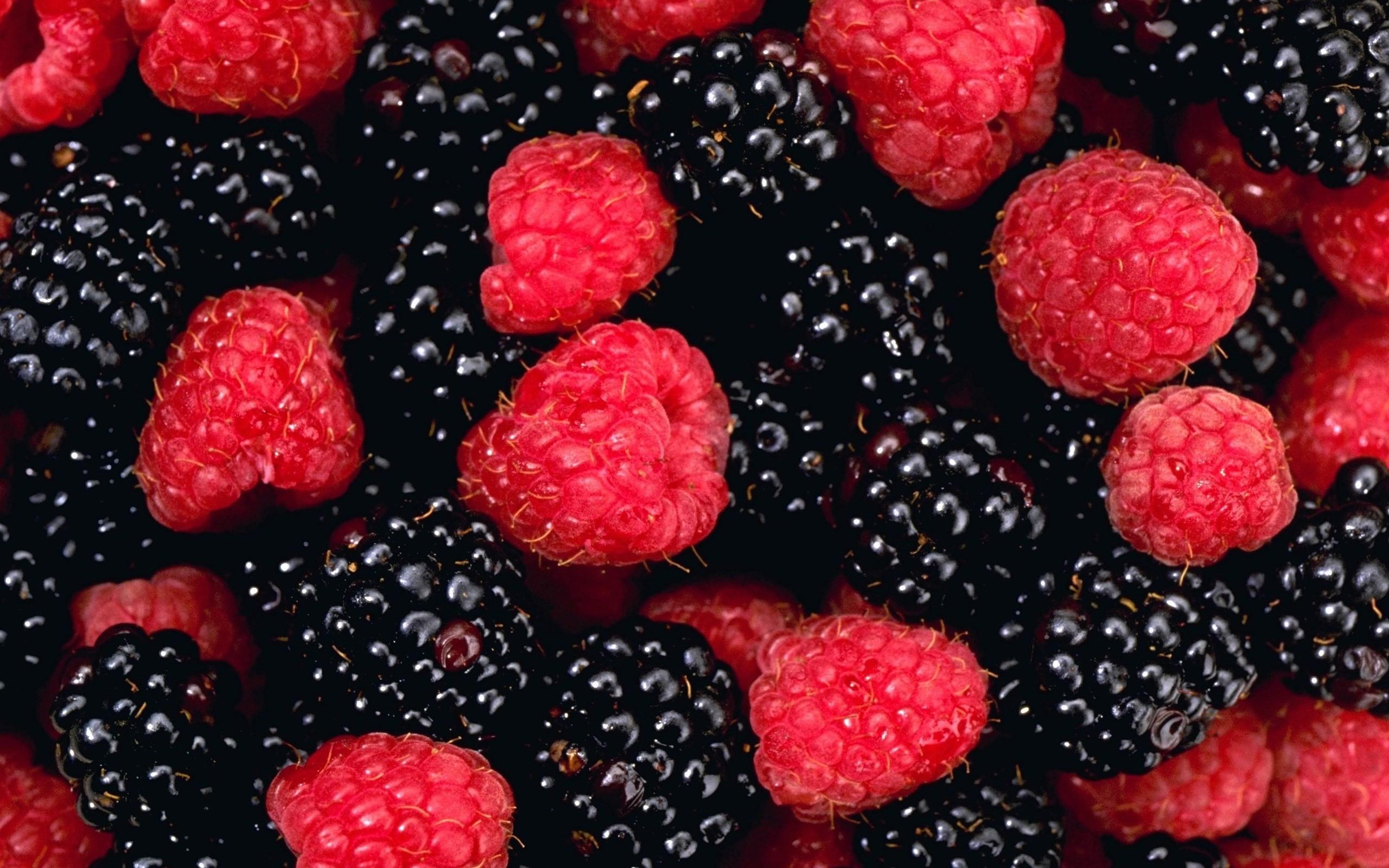 Blackberries HD Wallpapers