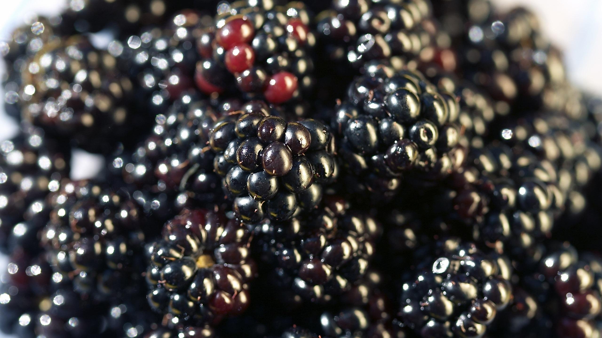Blackberries Wallpaper