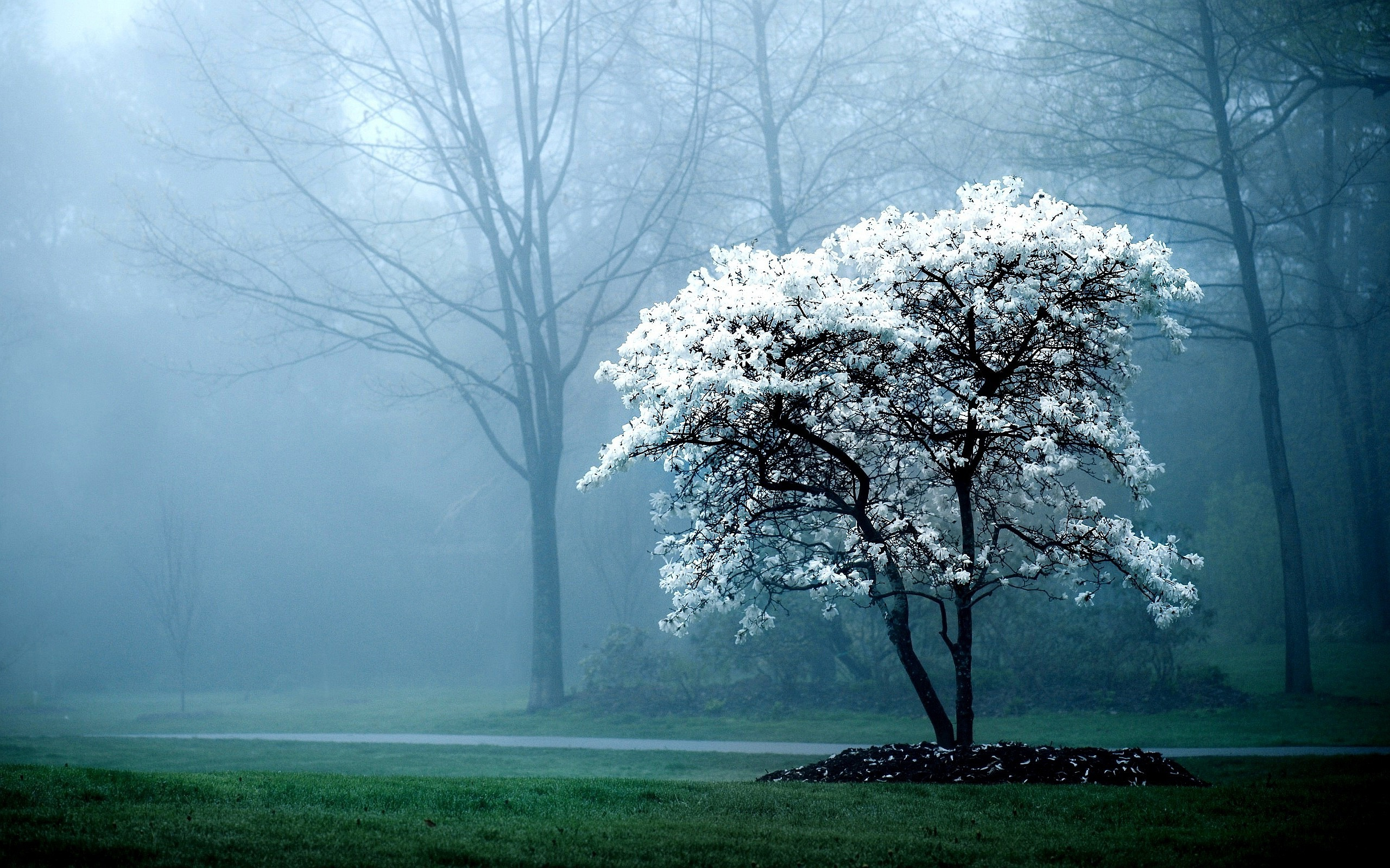 Bloomed Tree Morning