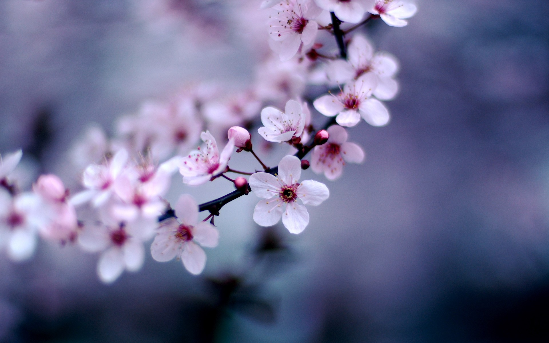 Blossom Wallpaper · Blossom Wallpaper ...