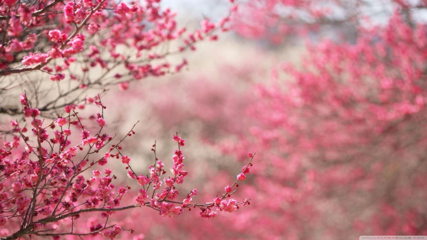 Blossom HD
