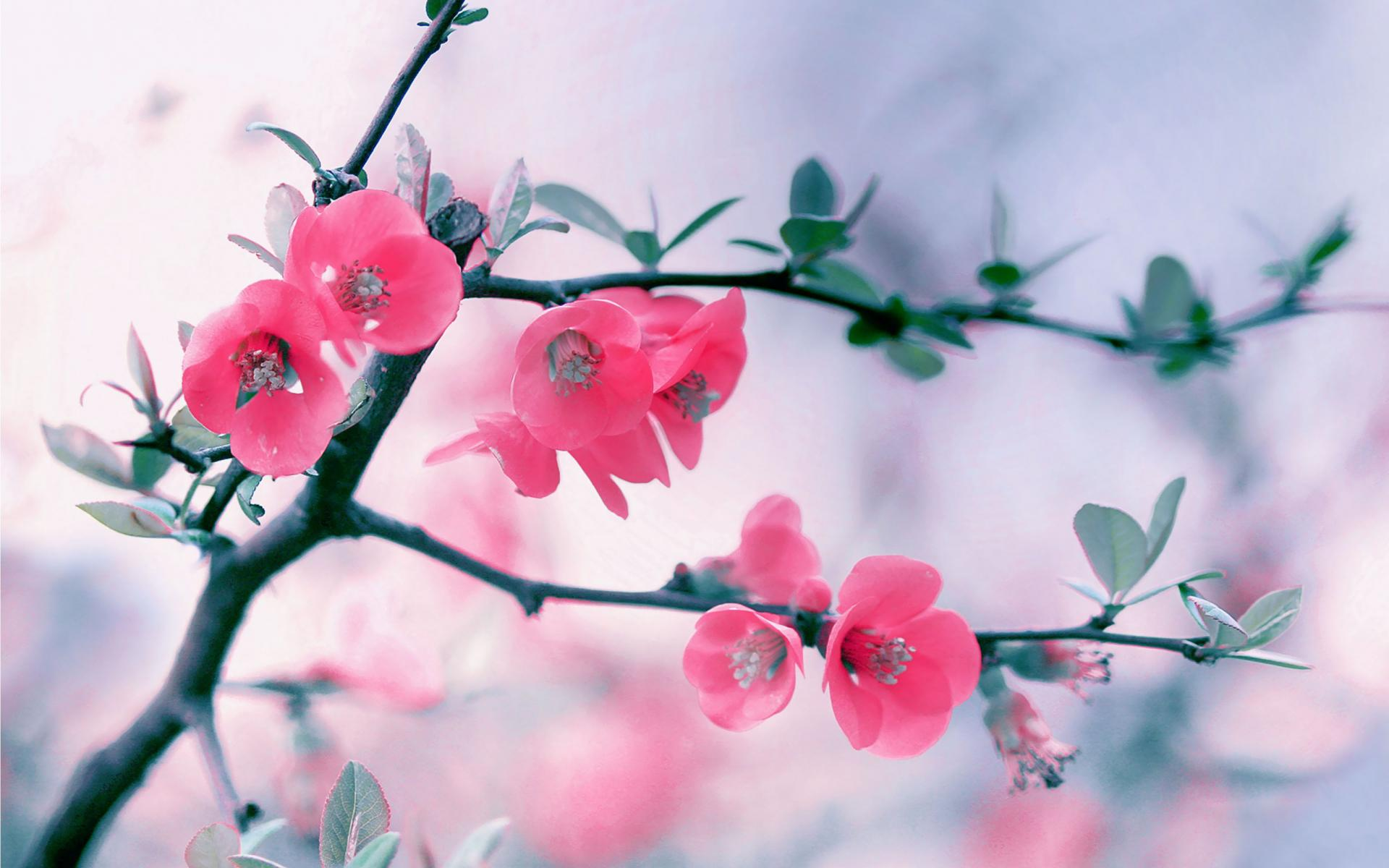Blossom Pictures