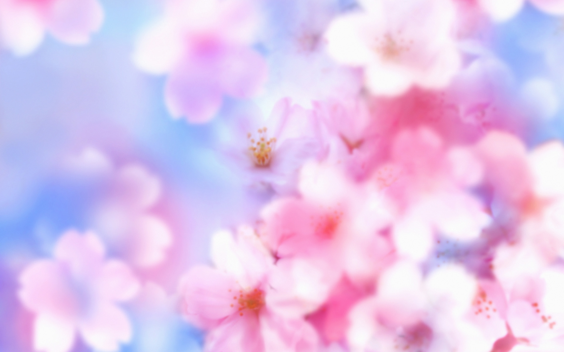 Blossom Wallpaper