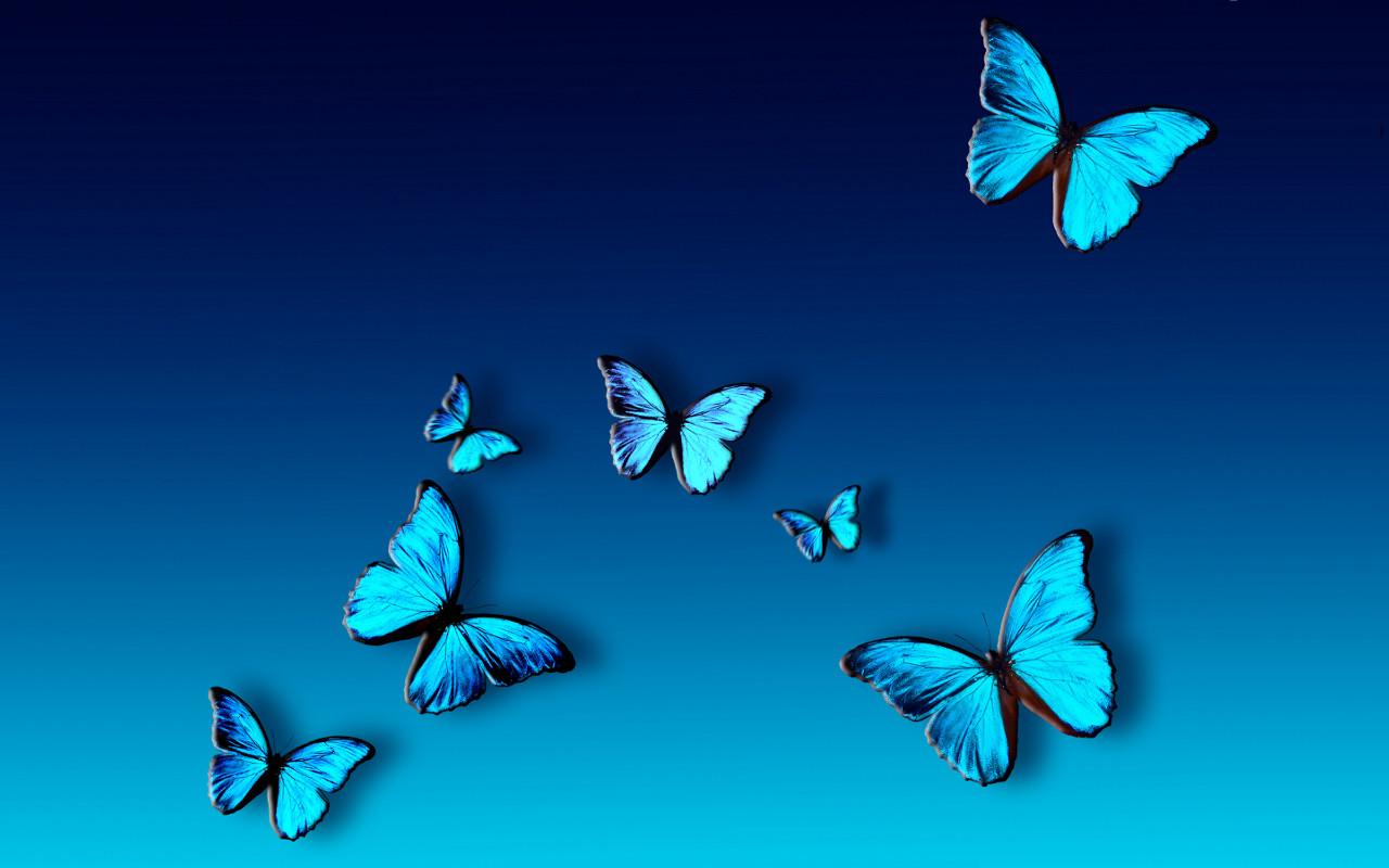 Butterfly Nature Abstract Animals Blue Butterflies Insects - 1280x800 iWallHD - Wallpaper HD