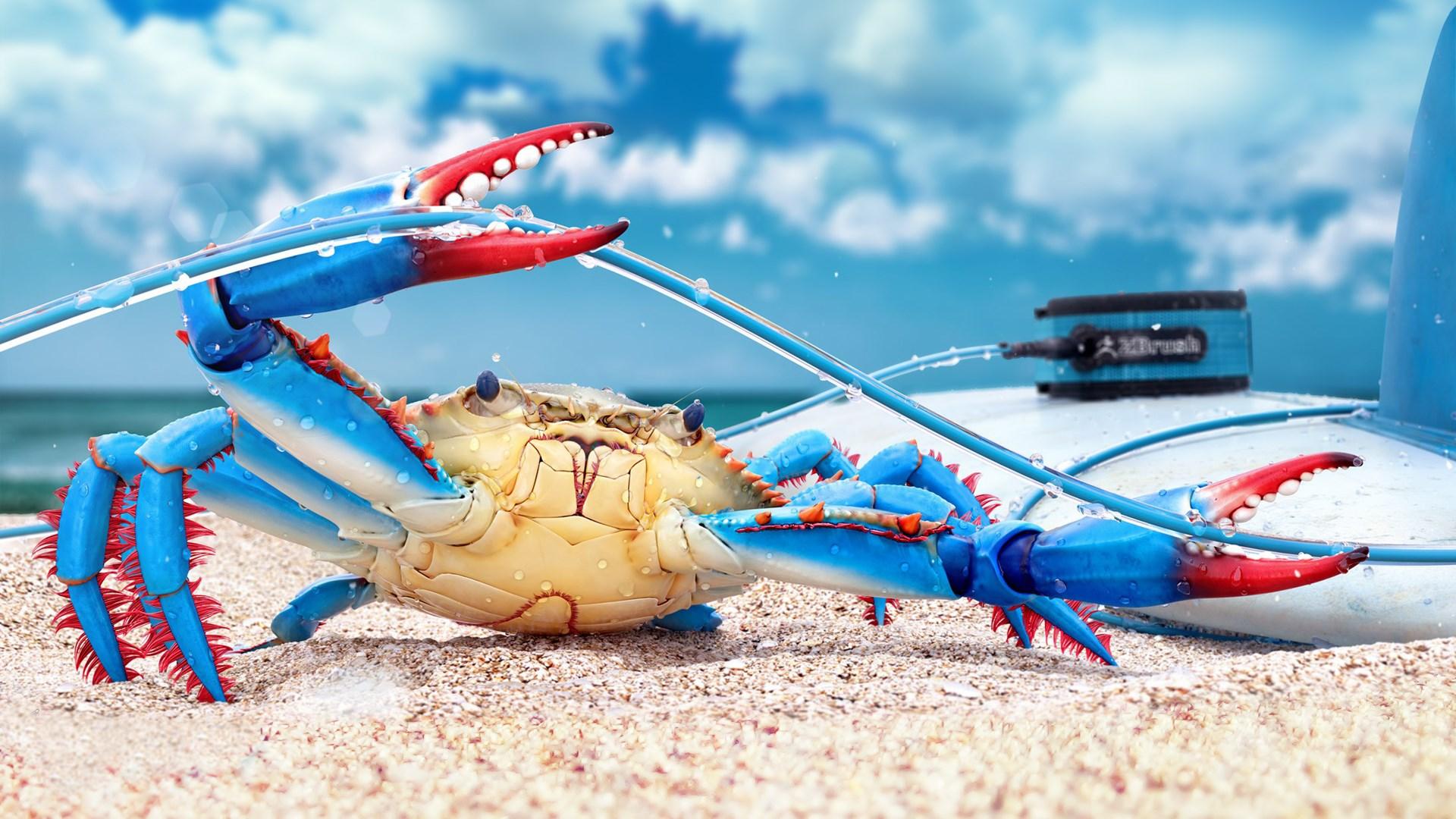 Blue Crab Beach Sand