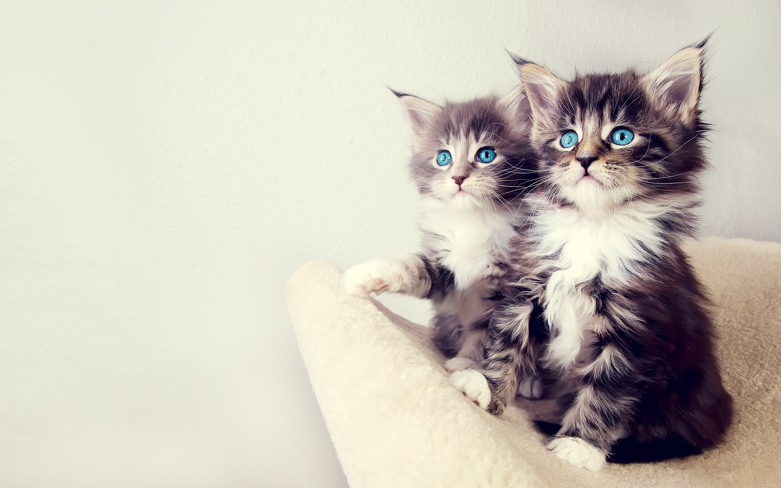 Lovely Kittens Blue Eyes Photo
