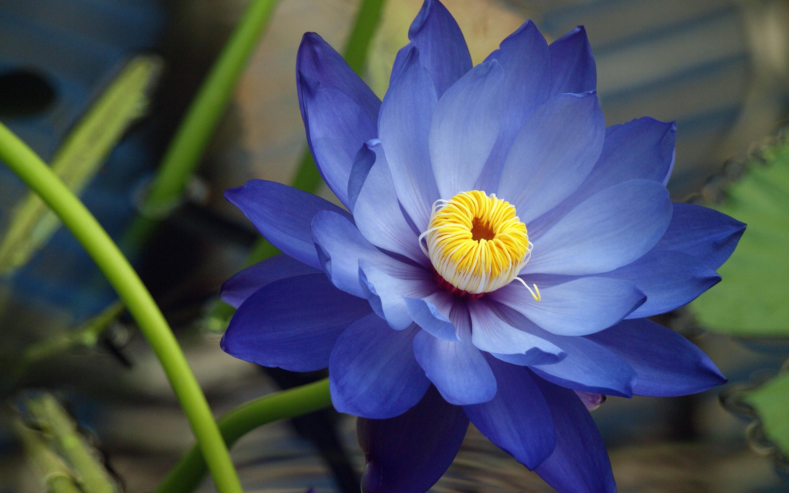 ... Blue Flowers Wallpaper ...