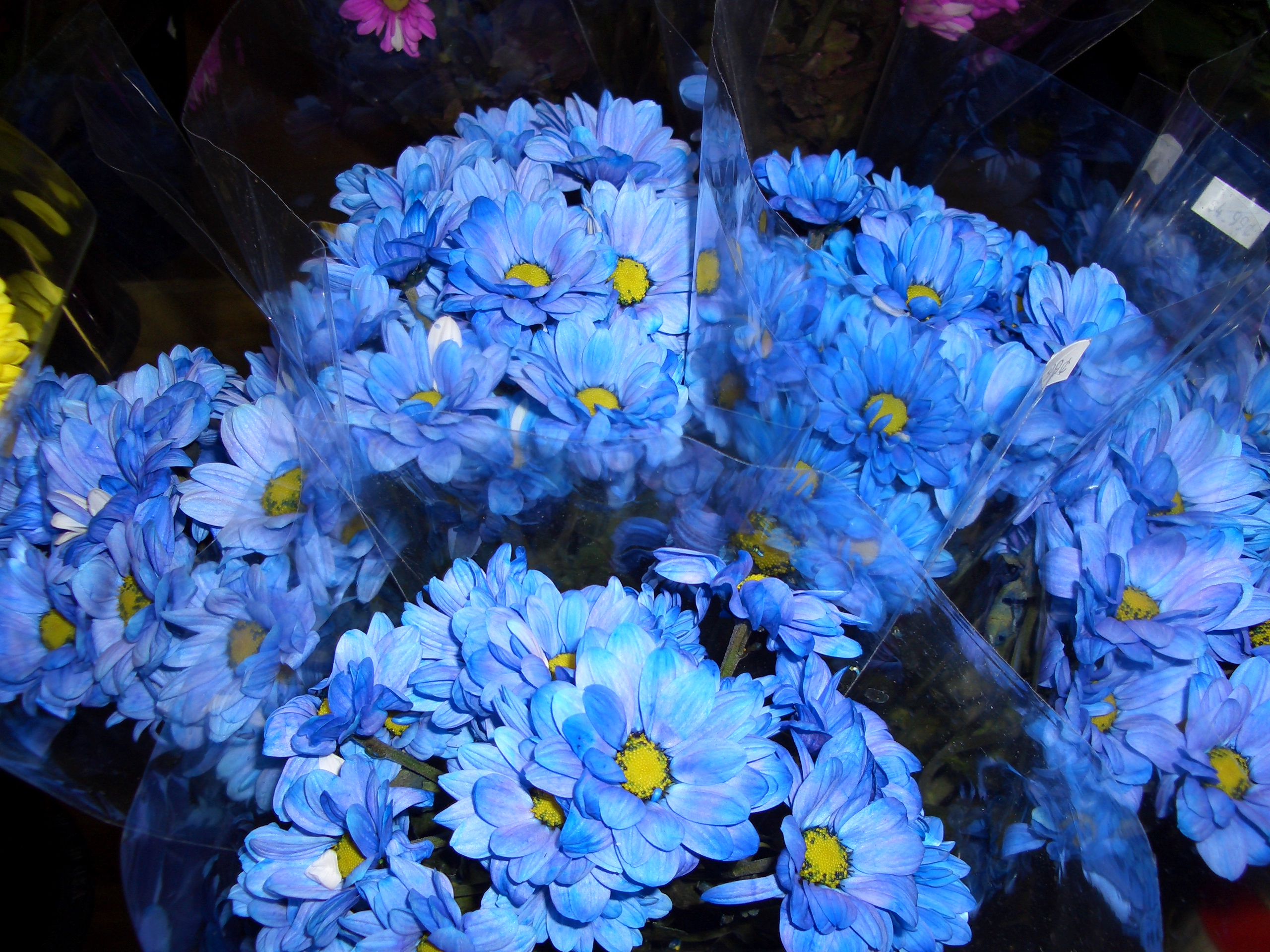 File:Blue Flowers.jpg