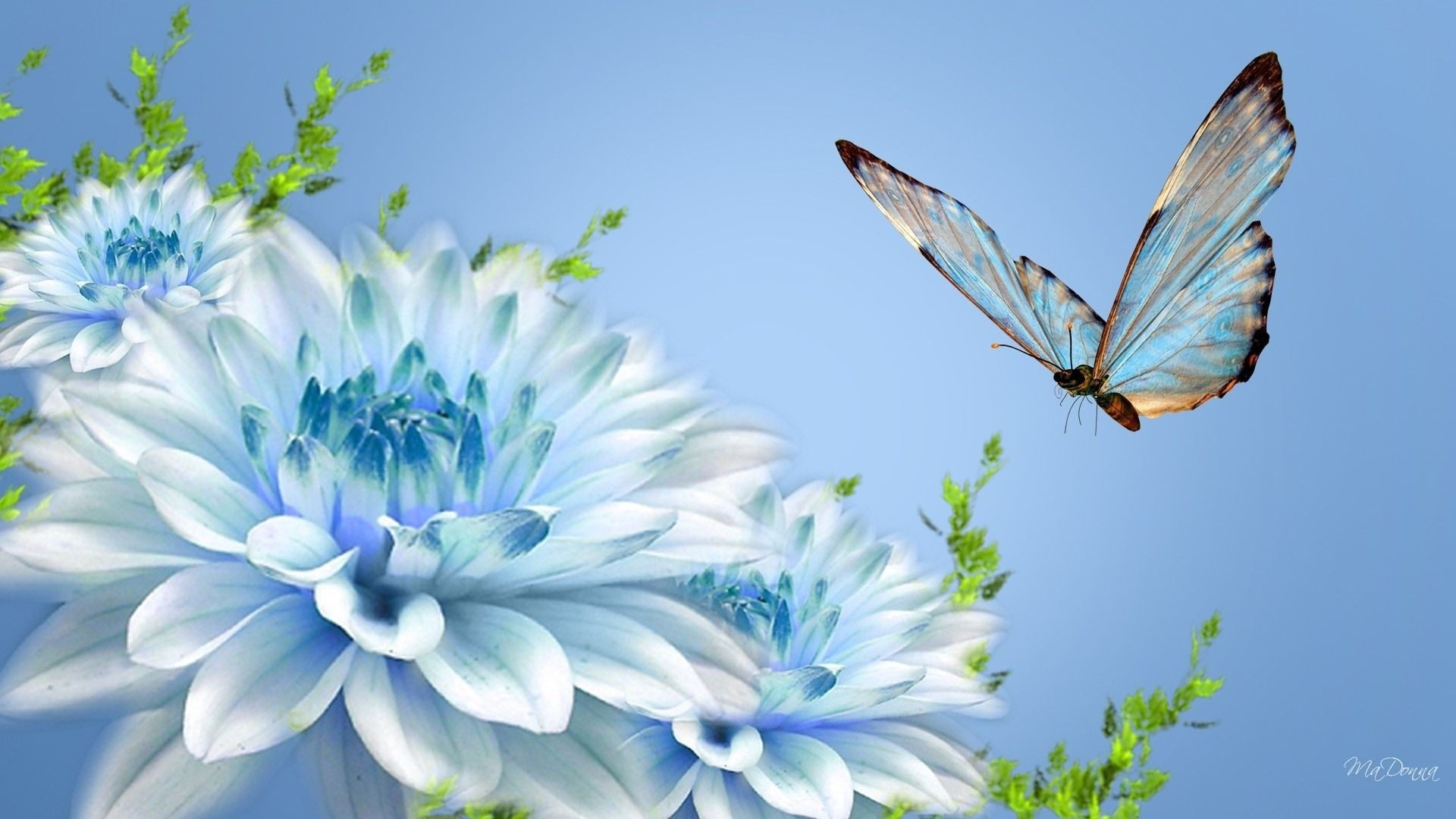 Blue Flowers And Butterfly