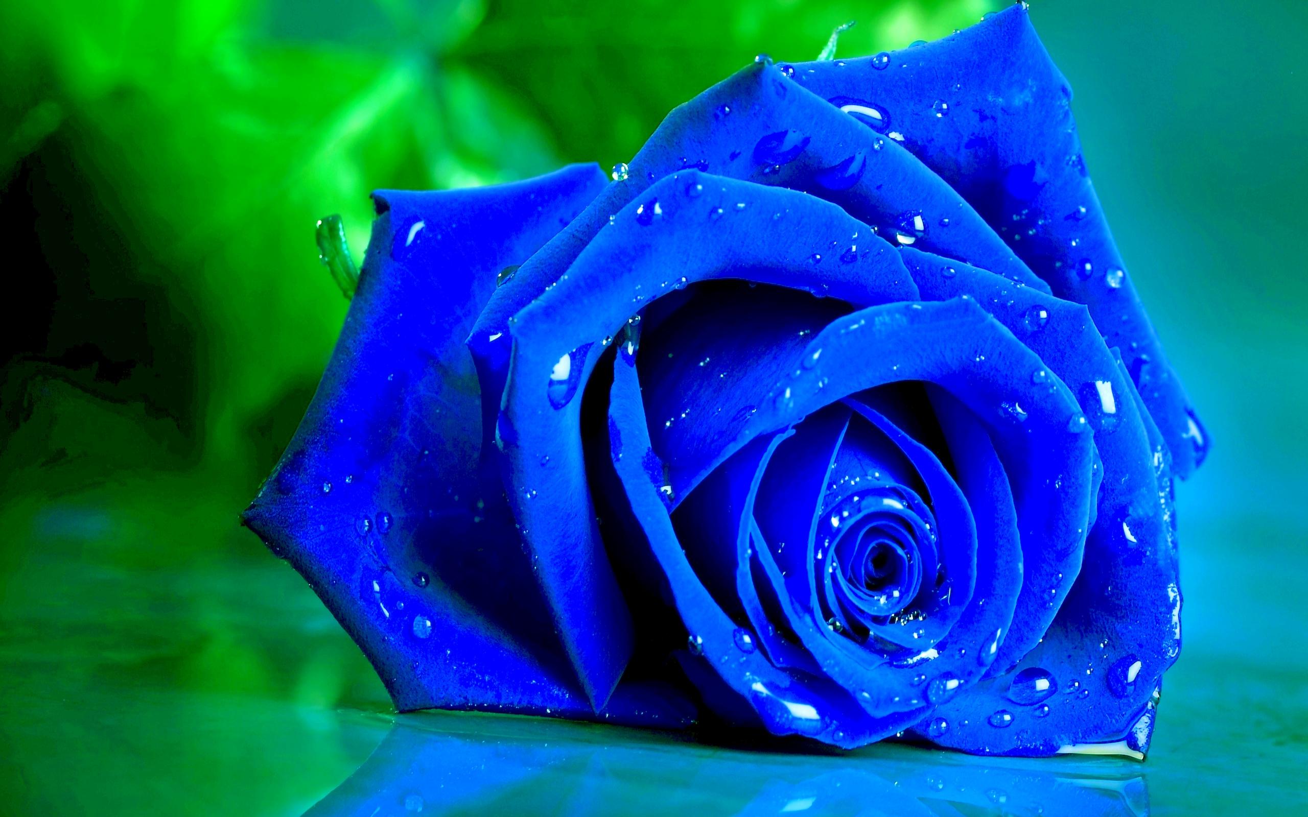 Beautiful Blue Roses 29660