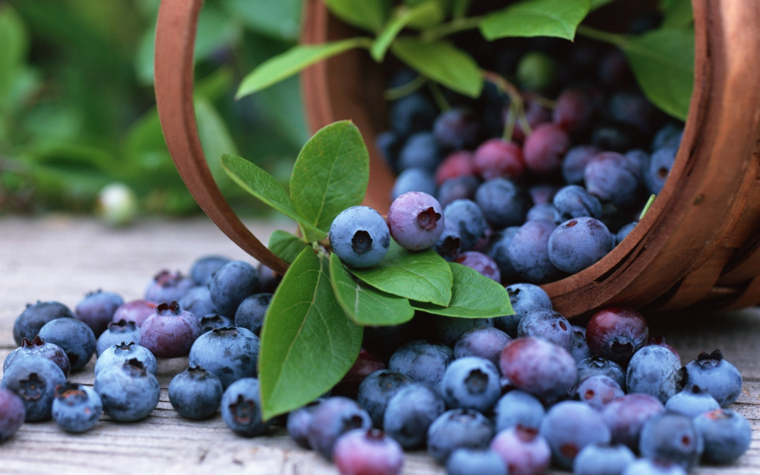 Blueberries, the Super Fruit – Increasing Immunity and Reducing Blood Pressure | The Birds The Word