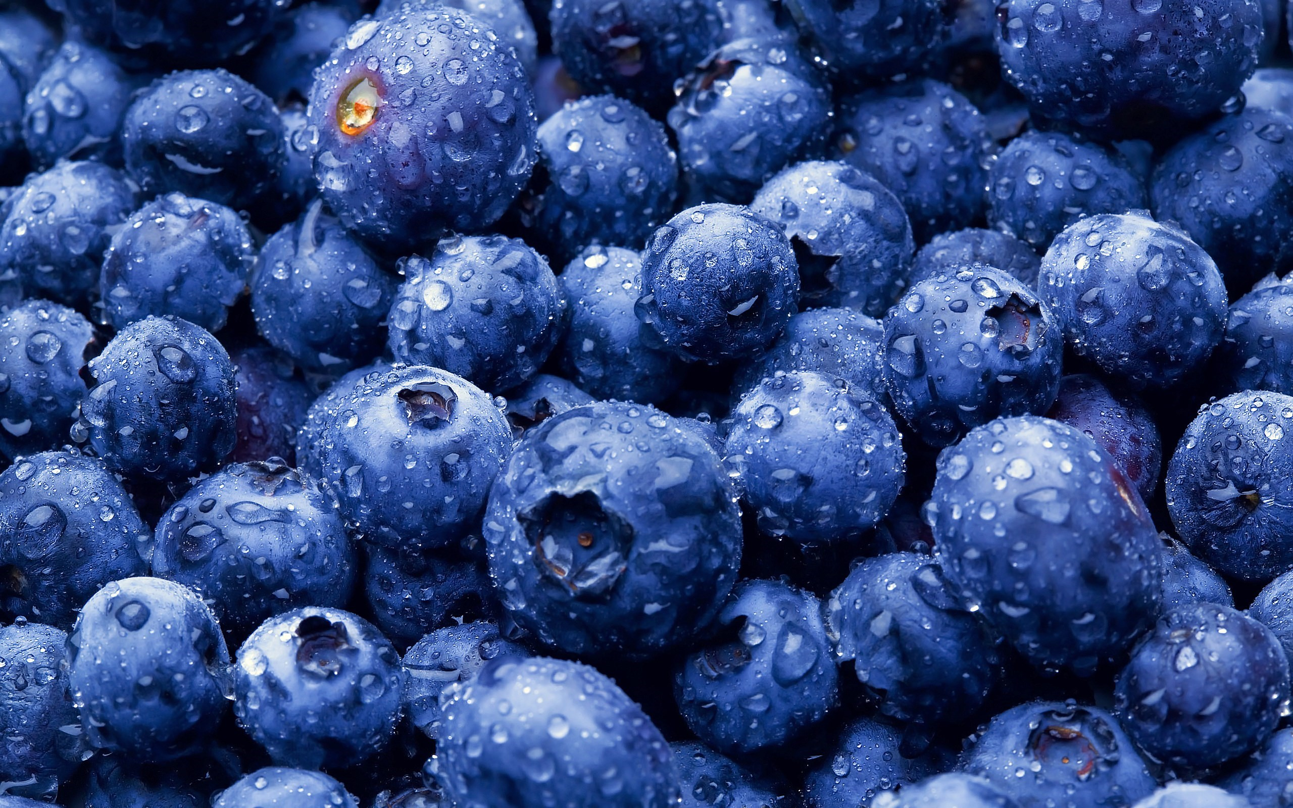 Blueberries Berries Close-Up HD Wallpaper