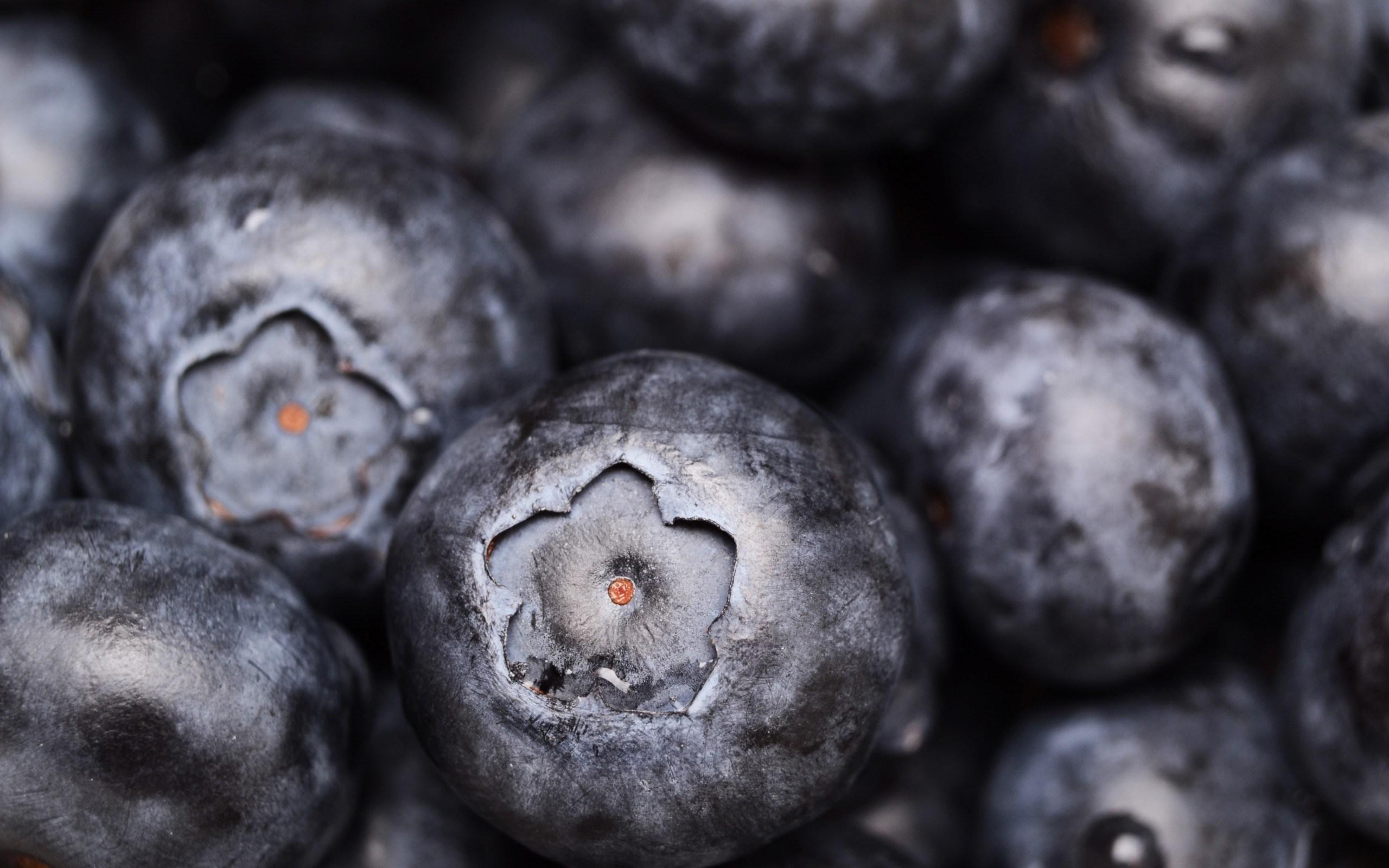 Blueberries Macro Berries